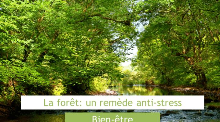 la forêt un remede anti stress