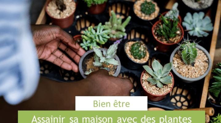 loisirs et privilèges assainir sa maison avec des plantes