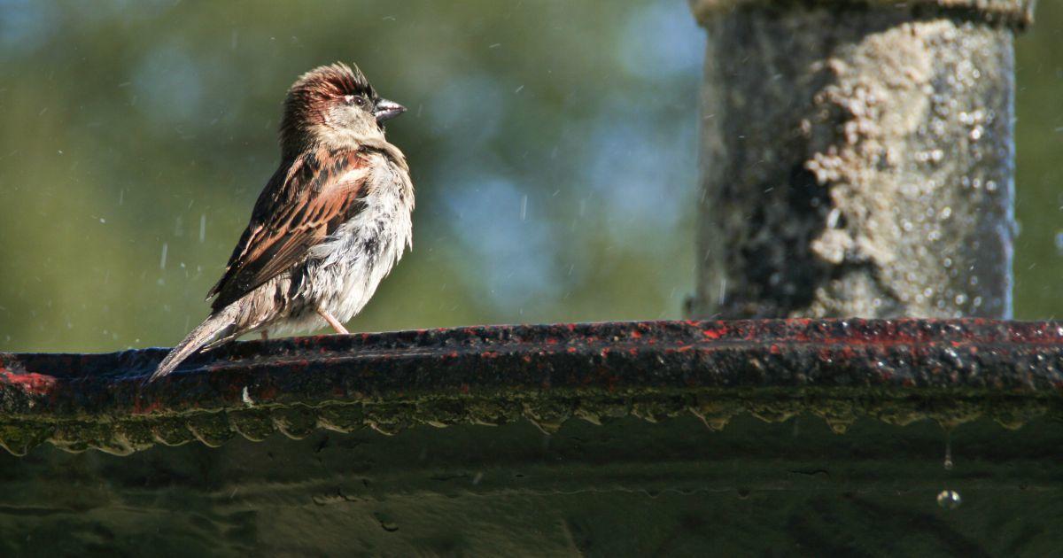 Bird bath 80