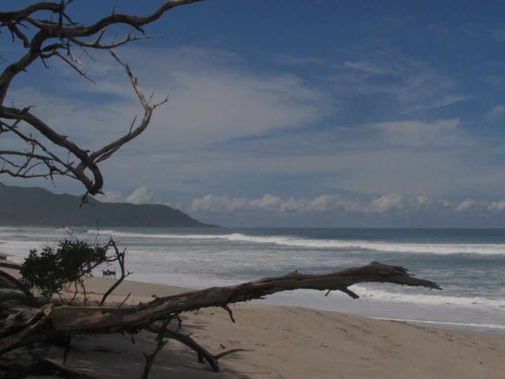 Beach and Trees in Santa Teresa