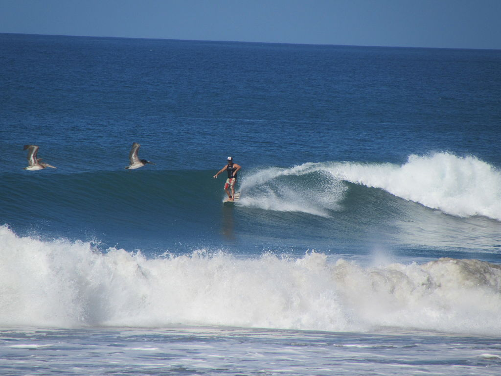 Seagulls and Surf in Santa Teresa