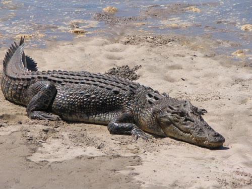 The 'Crocodile' Amazon Seller Secret