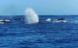 Ocean Rafting Whale Watch