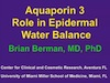 Aquaporin 3 Role in Epidermal Water Balance