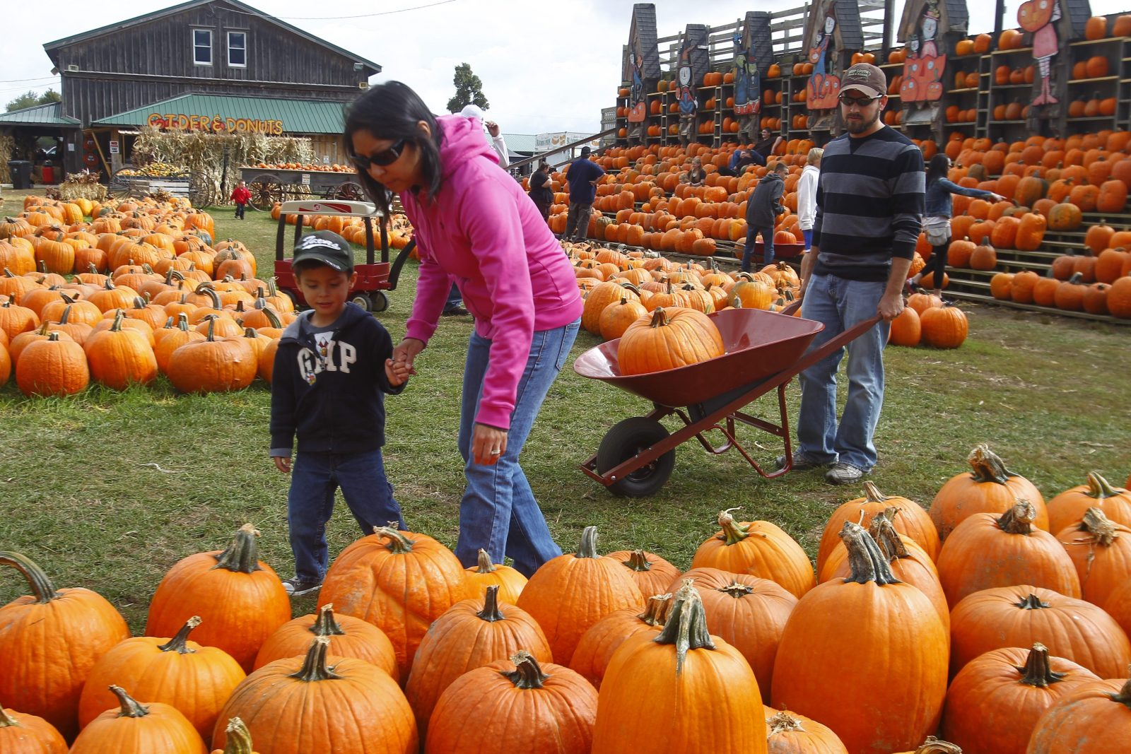 Three-year-old Jackson and his parents, Sandi and Derrick Harvill, search for another pumpkin to take home from the Great Pumpkin Farm in Clarence.