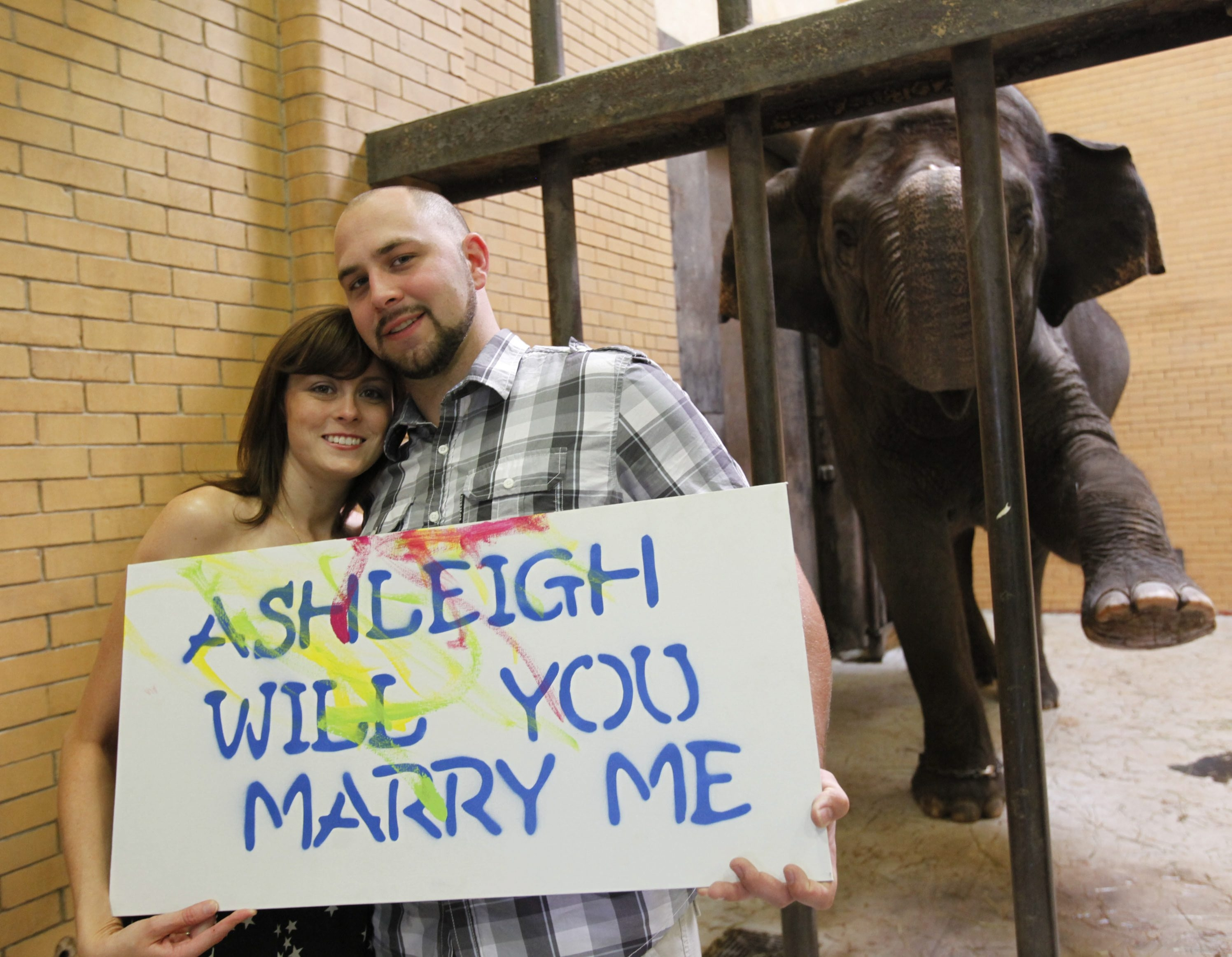 Ashleigh Gravel and Corey Scherrer hold up the poster on which Buffalo Zoo elephant Surapa was daubing paint before Scherrer's surprise proposal.