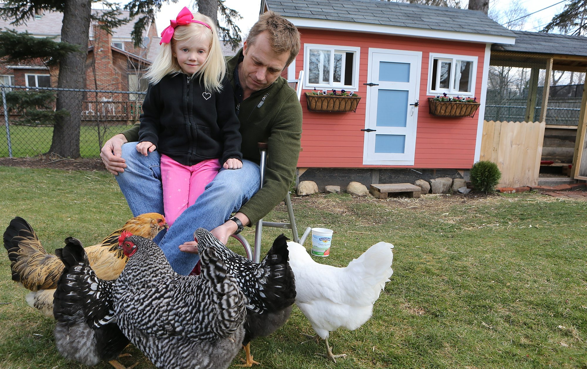 "Brooks Anderson and his daughter Amelia, 6, offer feed to the chickens they keep in the backyard of their Amherst home. Tensions appear to have dissolved with the zoning board's decision to re-hear Anderson's chicken application at its meeting next month. ""It gives them a mulligan,"" Anderson said. ""I'm happy that they have opened the door again."" (Charles Lewis/Buffalo News)"