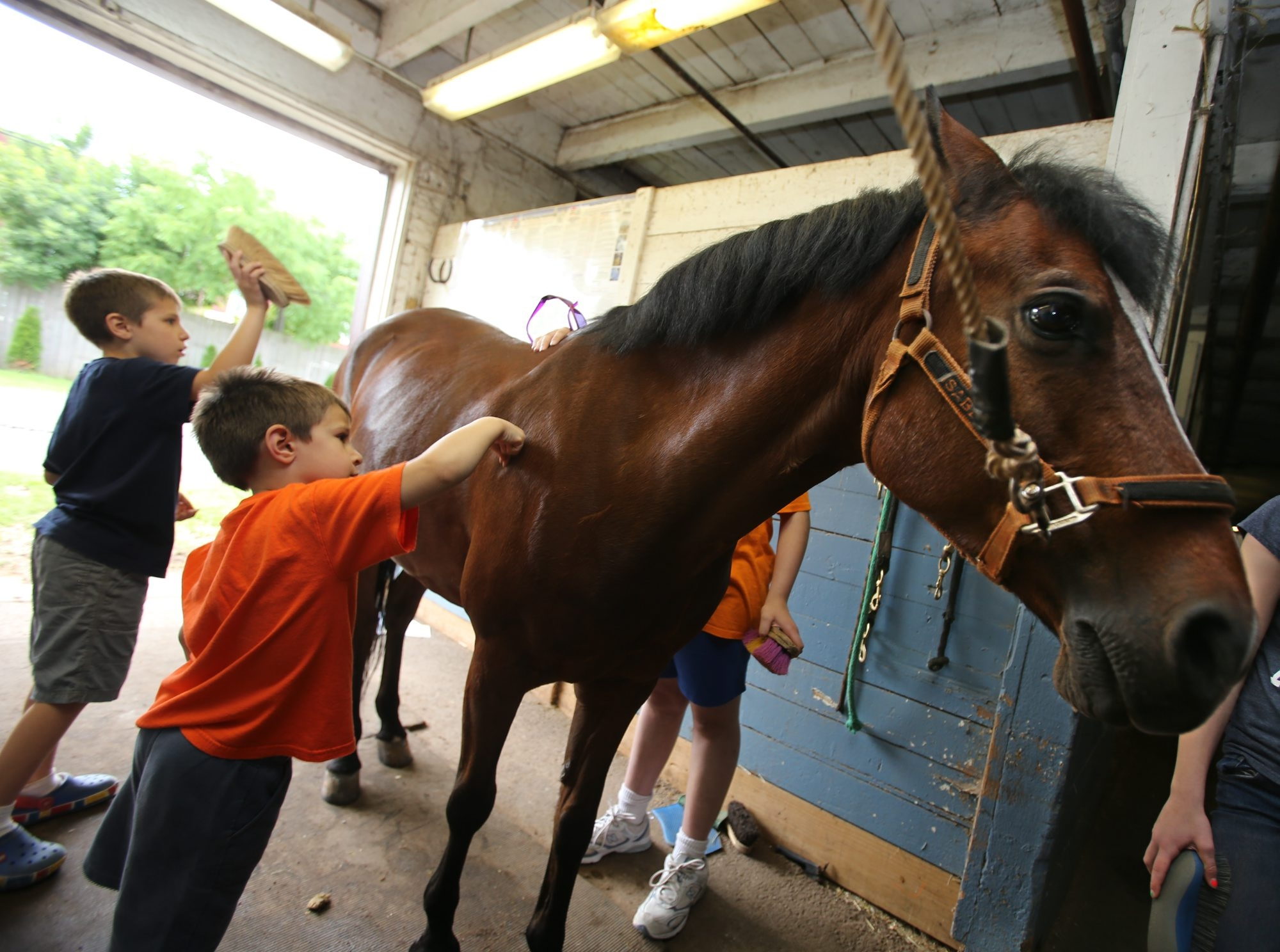 Brothers Alex, 11, left, and Jackson, 5, Olejniczak, of Elma, groom Howie the horse at the first Stephen's Fun Day.