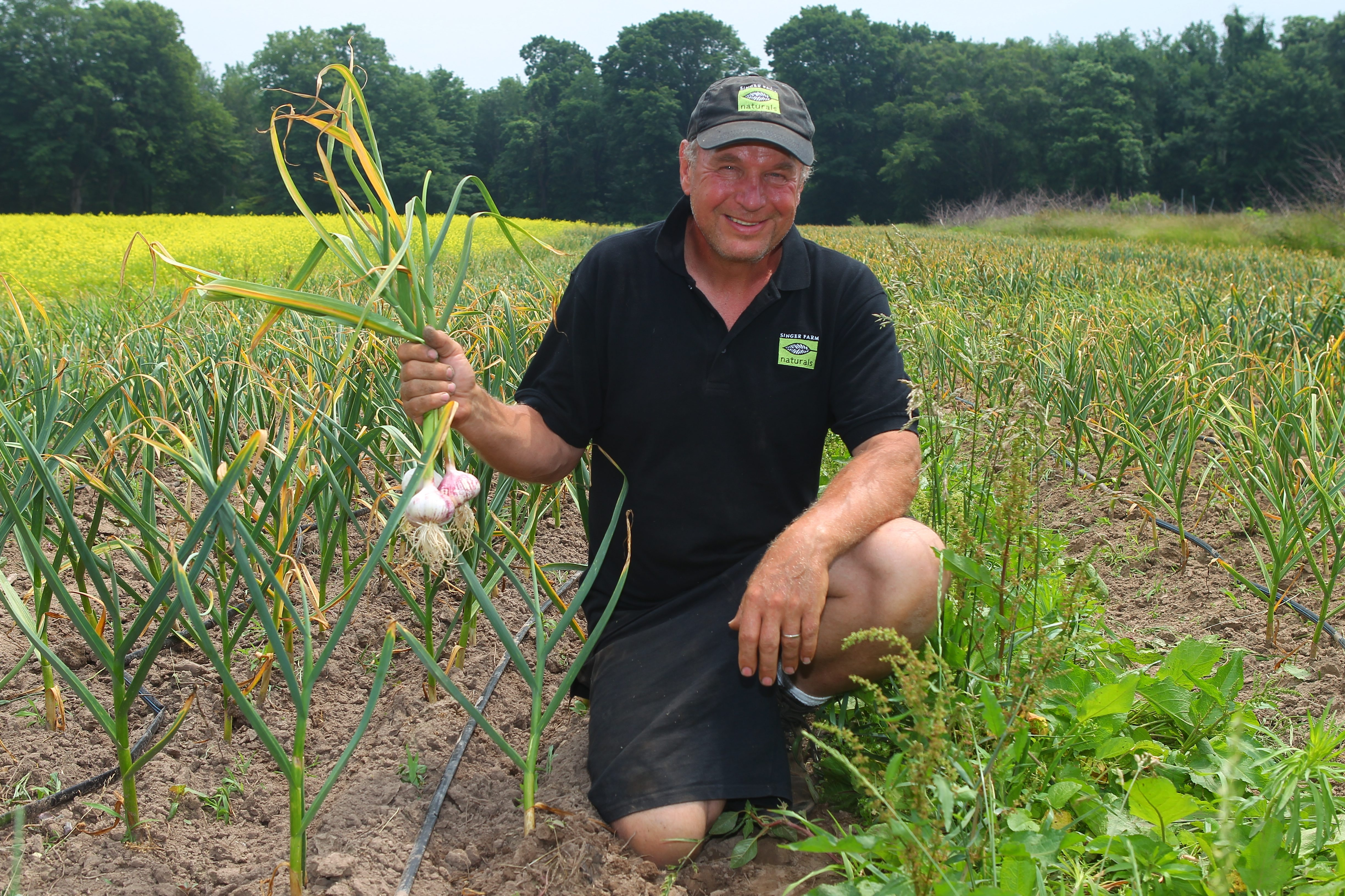 Tom Szulist, with fresh garlic in his east garlic field  at  Singer Farm Naturals in Appleton, has come a long way from being a stockbroker.