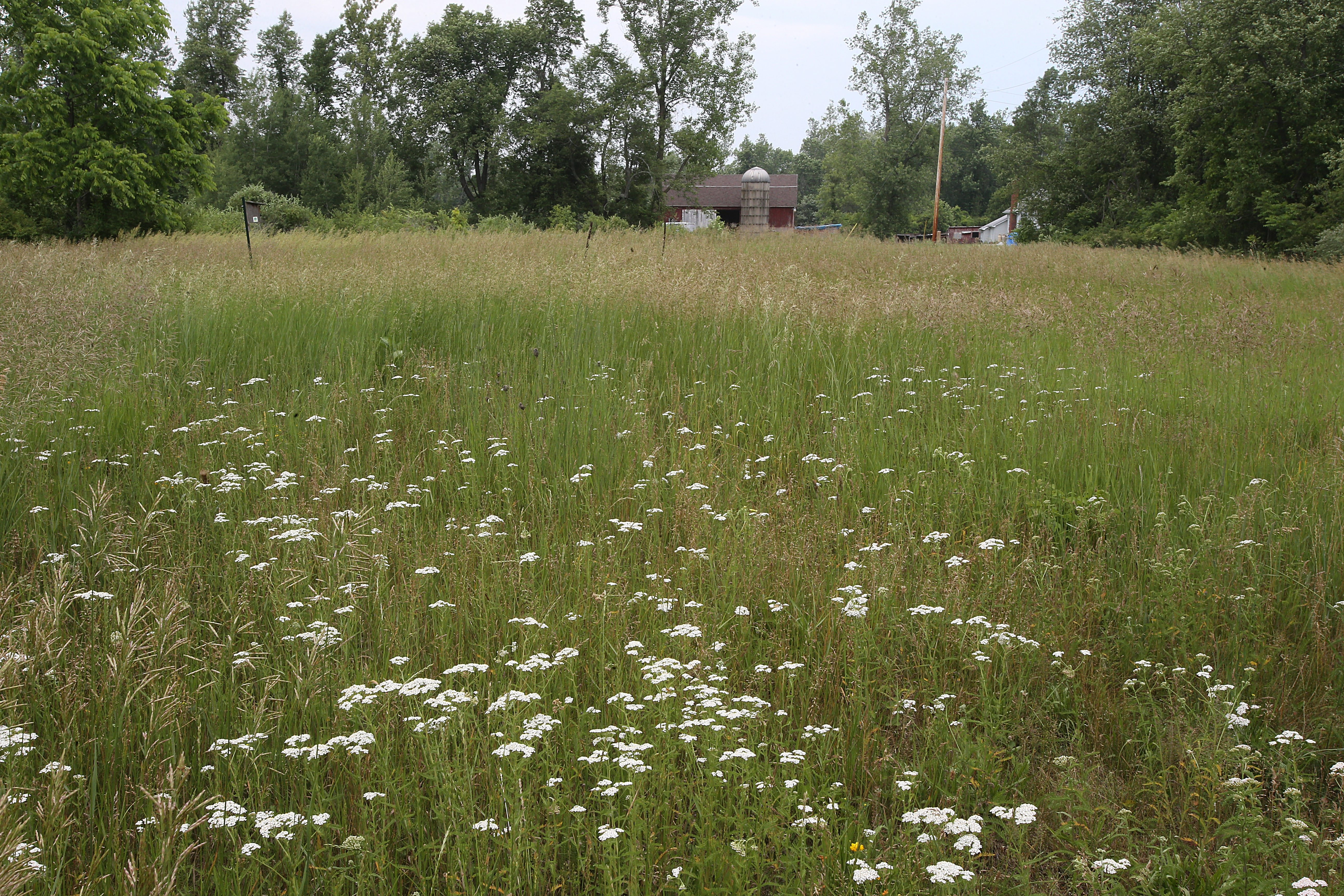 Clarence purchases former farmland to preserve wild land while developers envision Walmarts, Wegmans and T.G.I. Friday's.