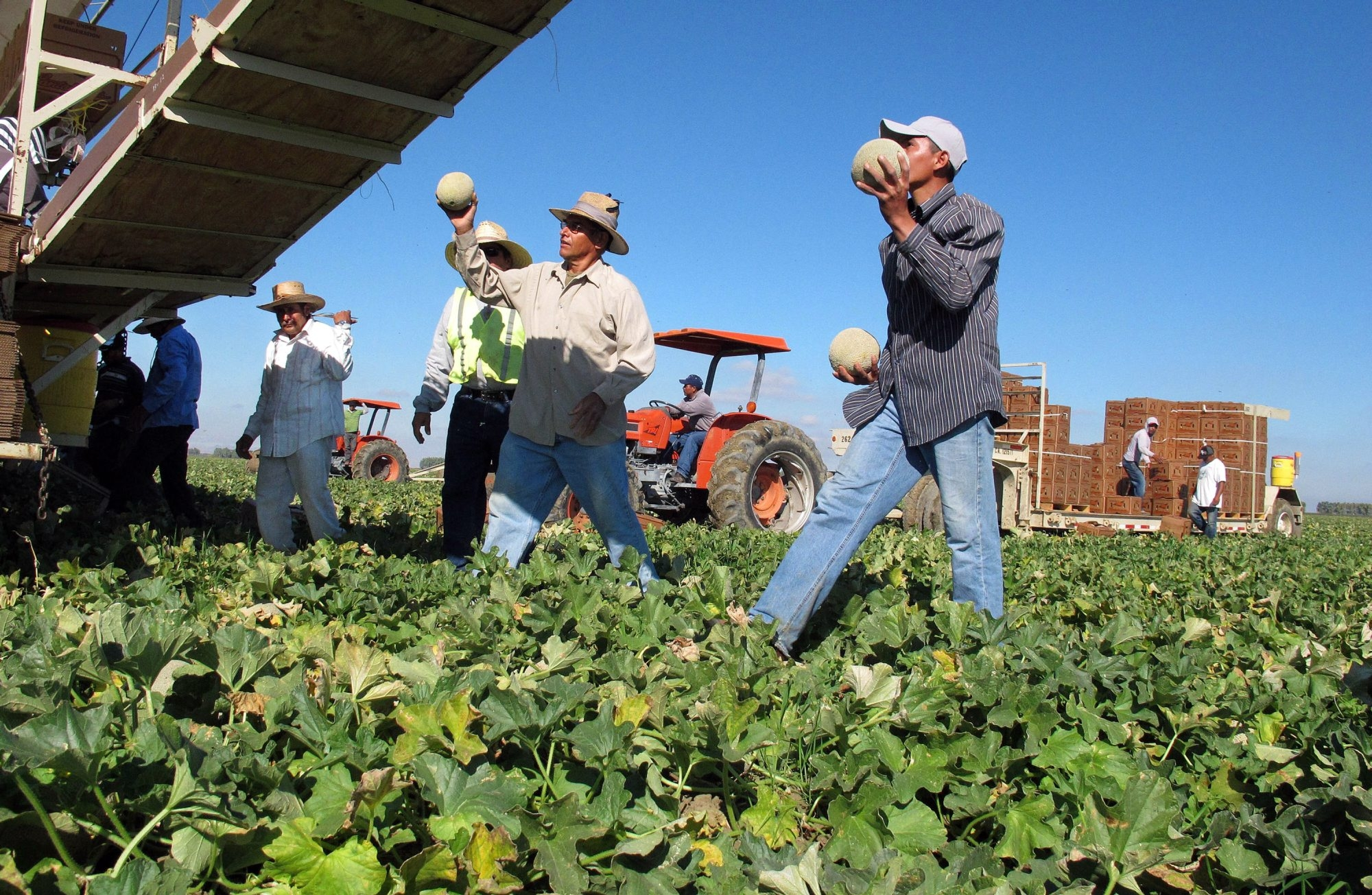For 40 years, farmworkers in California have benefited from rights denied to farmworkers in New York. (AP file photo)