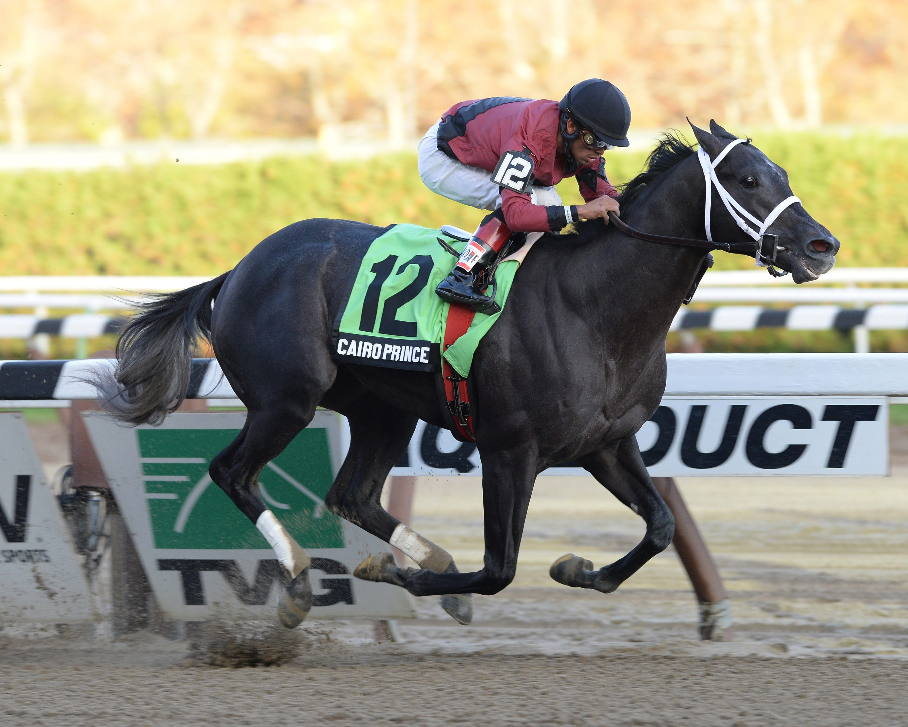 With a majority interest in Cairo Prince, Sheikh Mohammed Al Maktoum hopes he has a top contender for his first victory in the Kentucky Derby.
