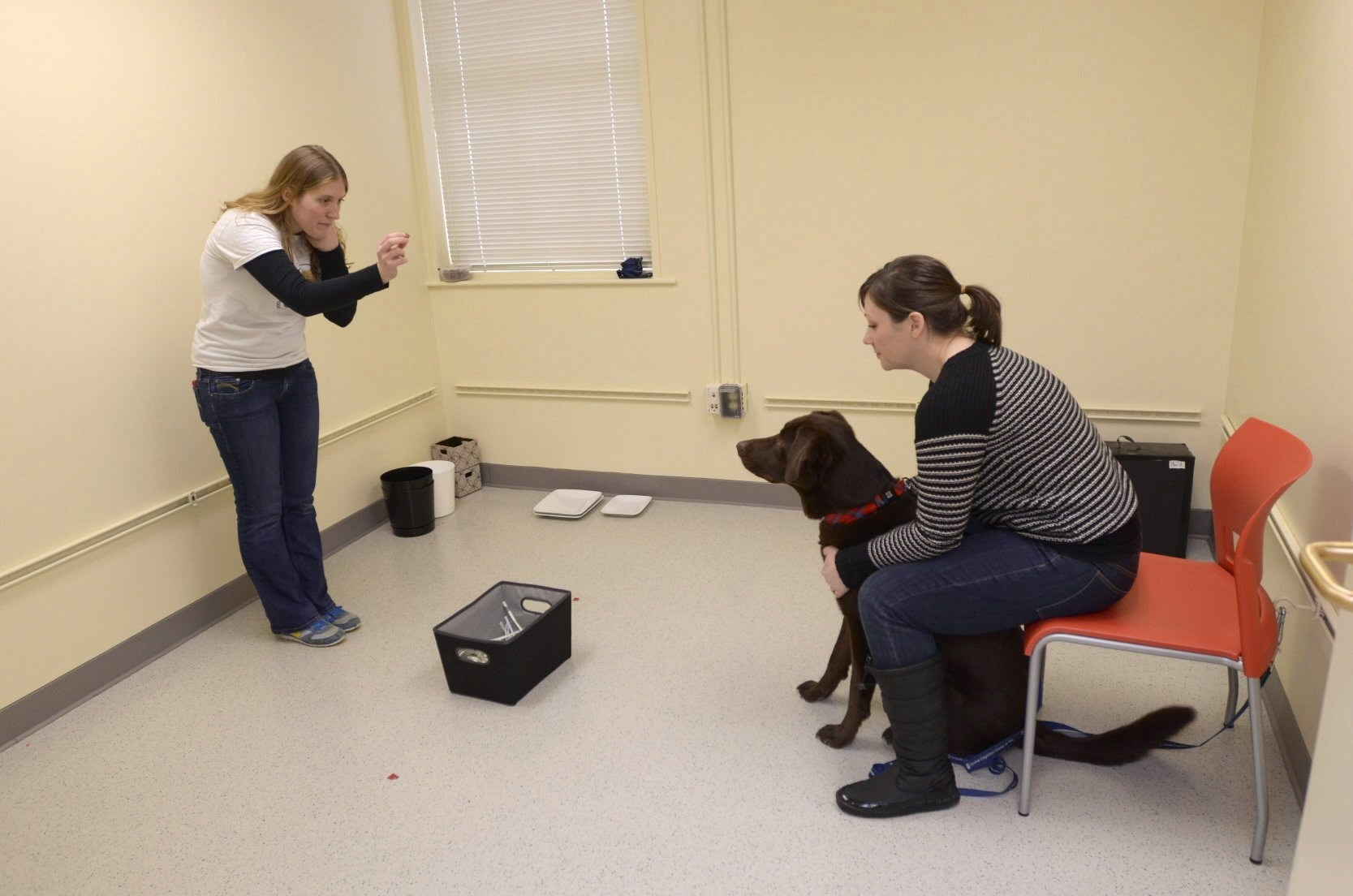 Porter, a 4-year-old chocolate lab mix, is put through behavioral exercises by Angie Johnston, left, at the Canine Cognition Center at Yale University.