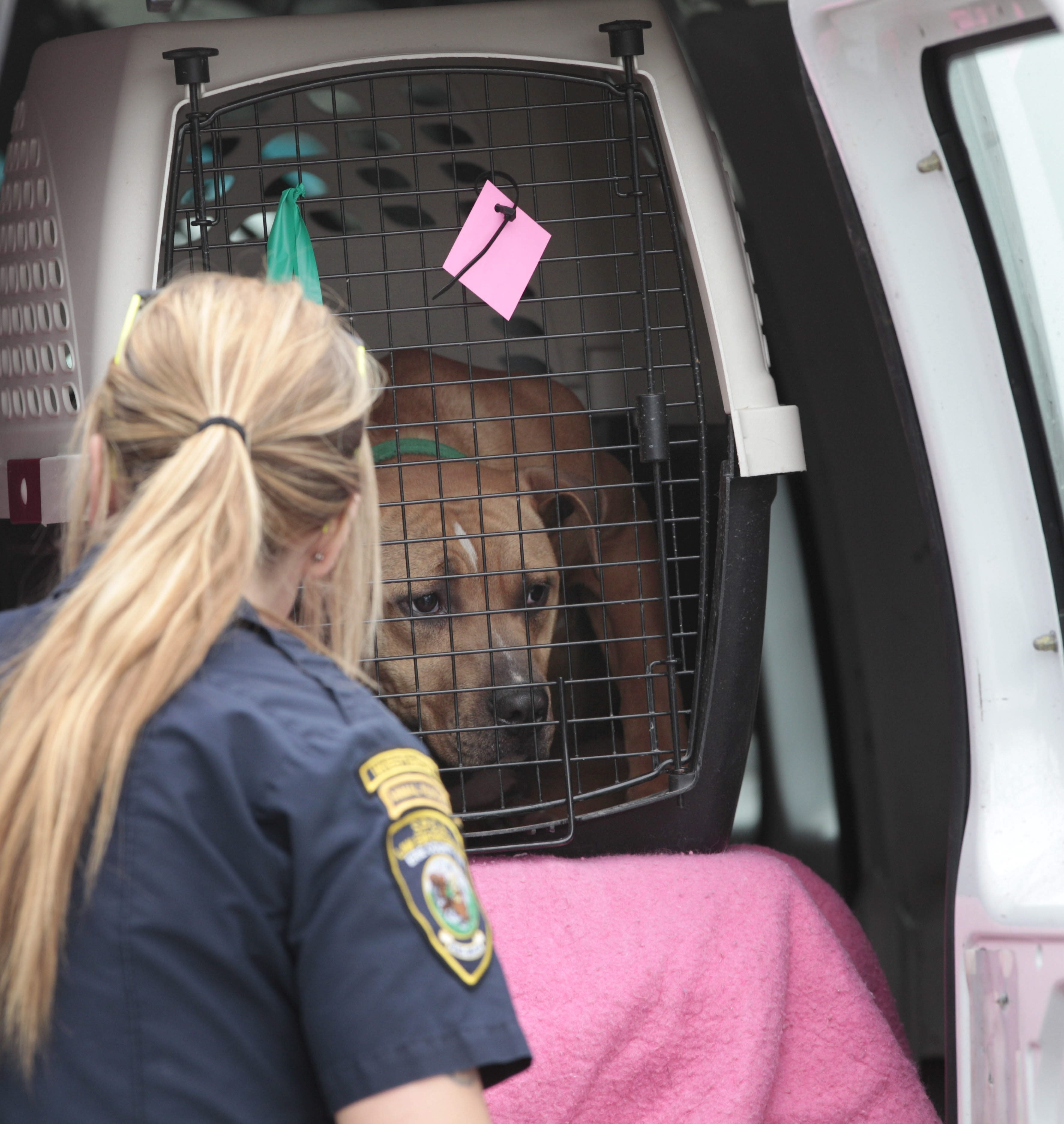 An SPCA officer removes a dog from 269 Loring Ave., one of seven houses raided Friday.