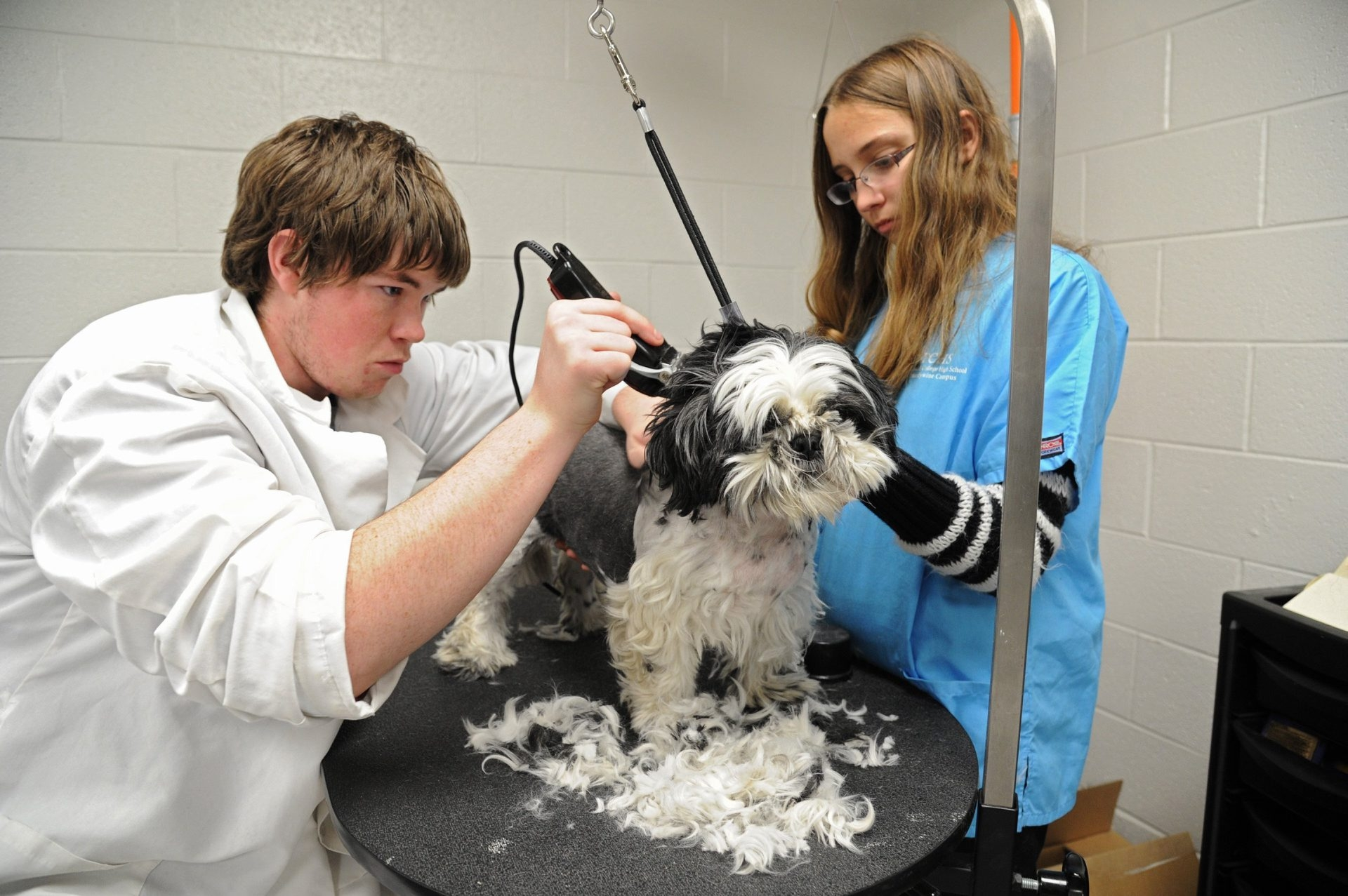Students Scott Persing, 18, and Courtney Draper, 17, take a step toward a veterinary career as they practice their skills on Dwight the shih-tzu at Technical College High.