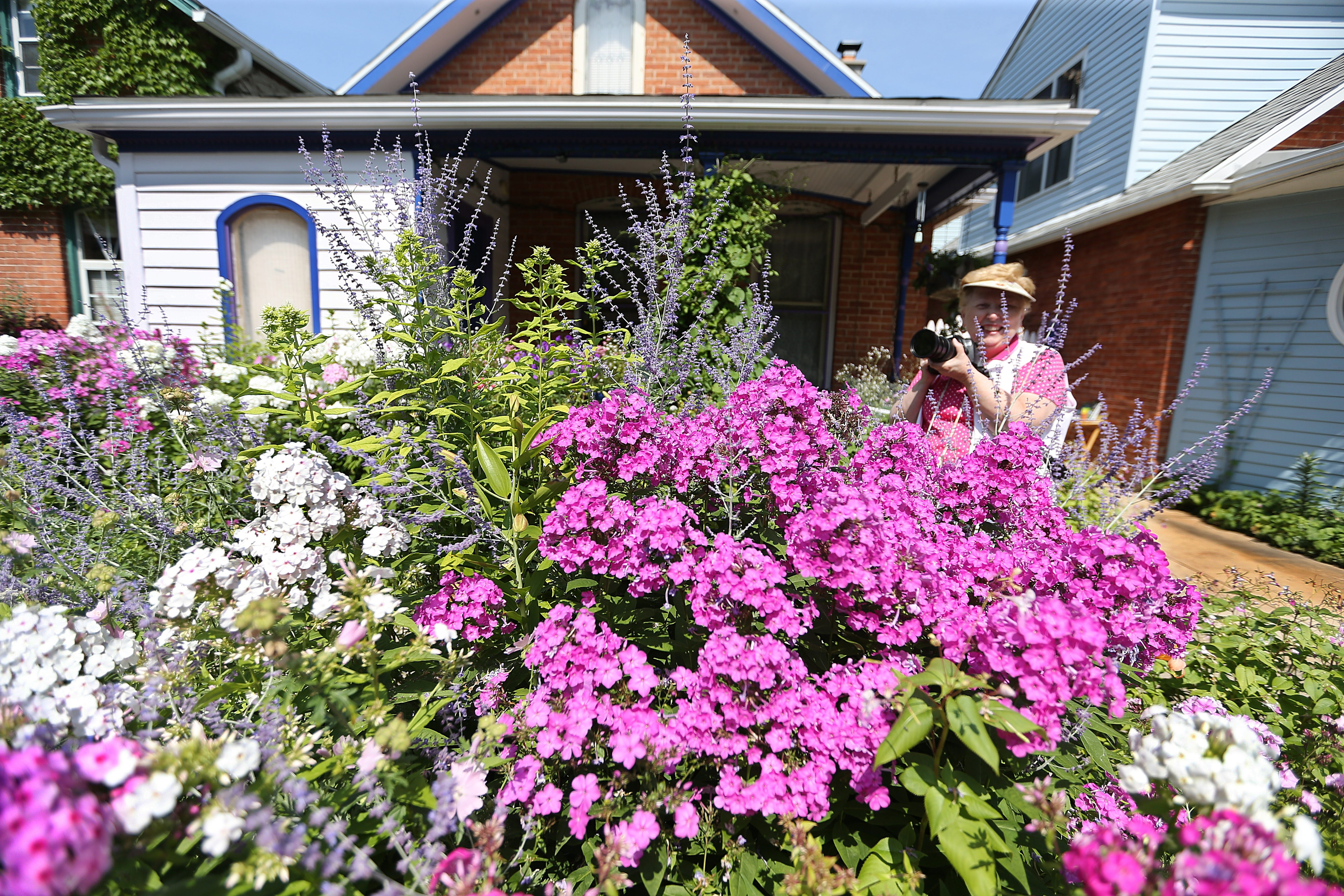 Sharon Dentice, president of the Buffalo Science Museum Camera Club, photographed flowers on Summer Street before last weekend's Garden Walk Buffalo.