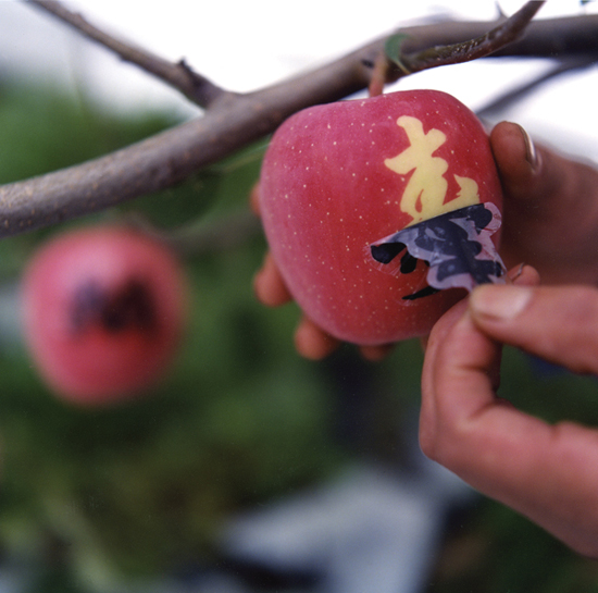 Article: Japan, land of the $150 handcrafted apple