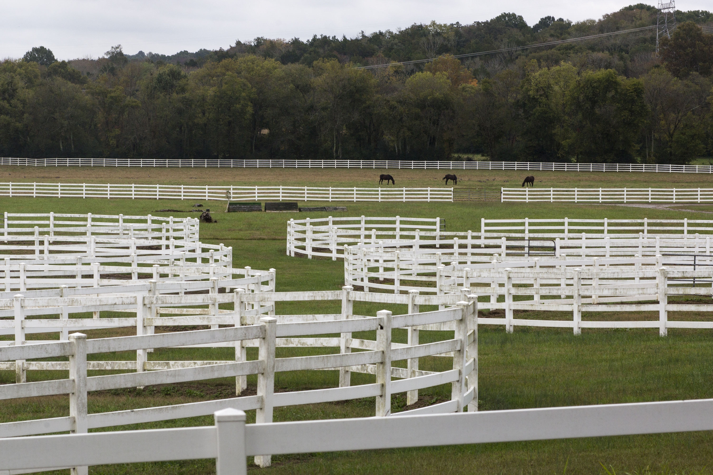 Horses graze in LeiperþÄôs Fork, Tenn., a 15-minute drive from downtown Franklin, Oct. 12, 2014.  Some call Franklin a suburb of Music City þÄî and plenty of farmland has been developed into subdivisions, strip malls and office plazas þÄî but it is a world away, with a history and culture all its own. (Joe Buglewicz/The New York Times) -- PHOTO MOVED IN ADVANCE AND NOT FOR USE - ONLINE OR IN PRINT - BEFORE OCT. 26, 2014.