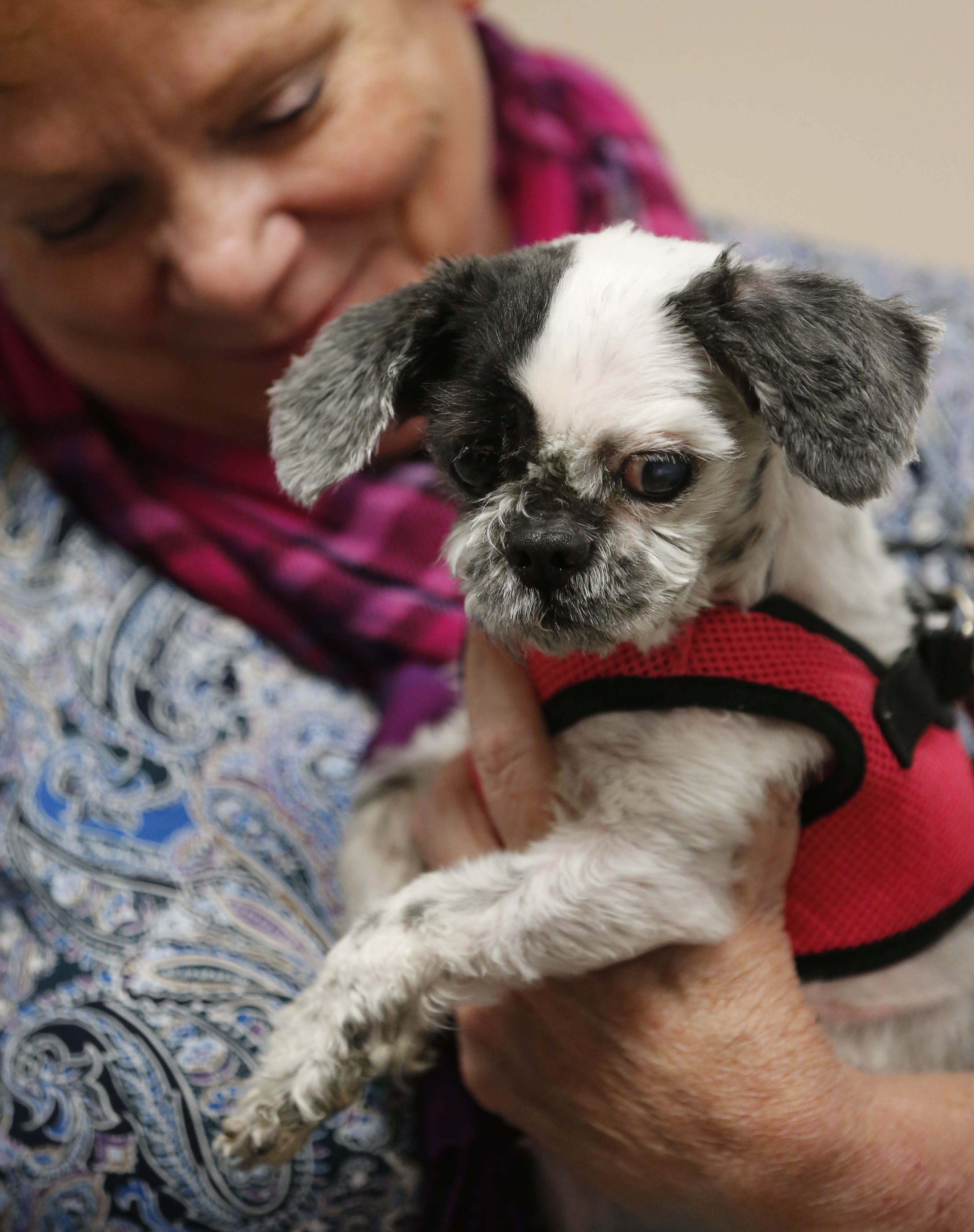 Dori gets a little TLC from her new owner, Sally Schrett of Tonawanda, at the SPCA Serving Erie County's facility in Tonawanda on Monday.