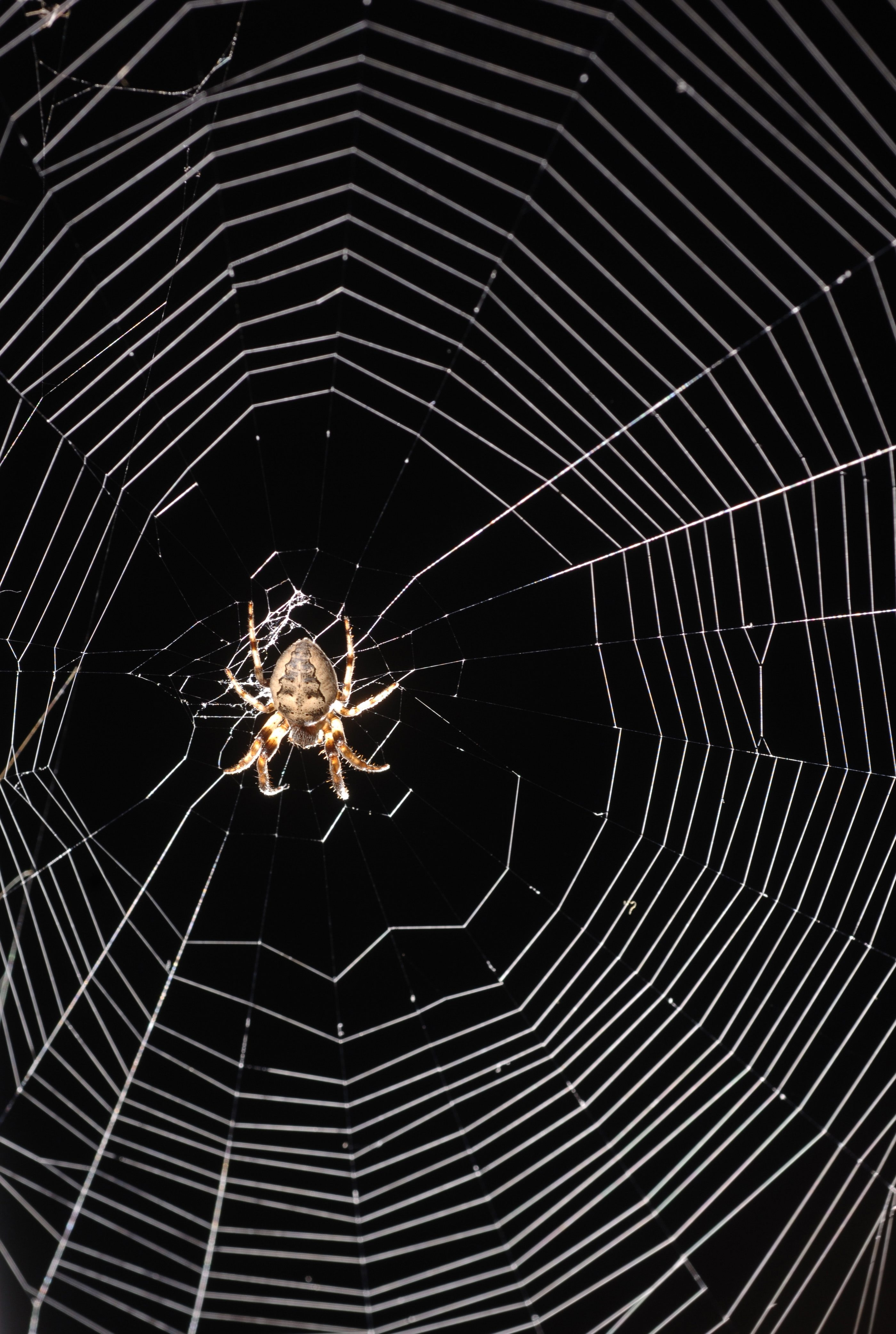 Spiders, which have poor eyesight, rely on vibrations from their webs to tell them that prey has been trapped.