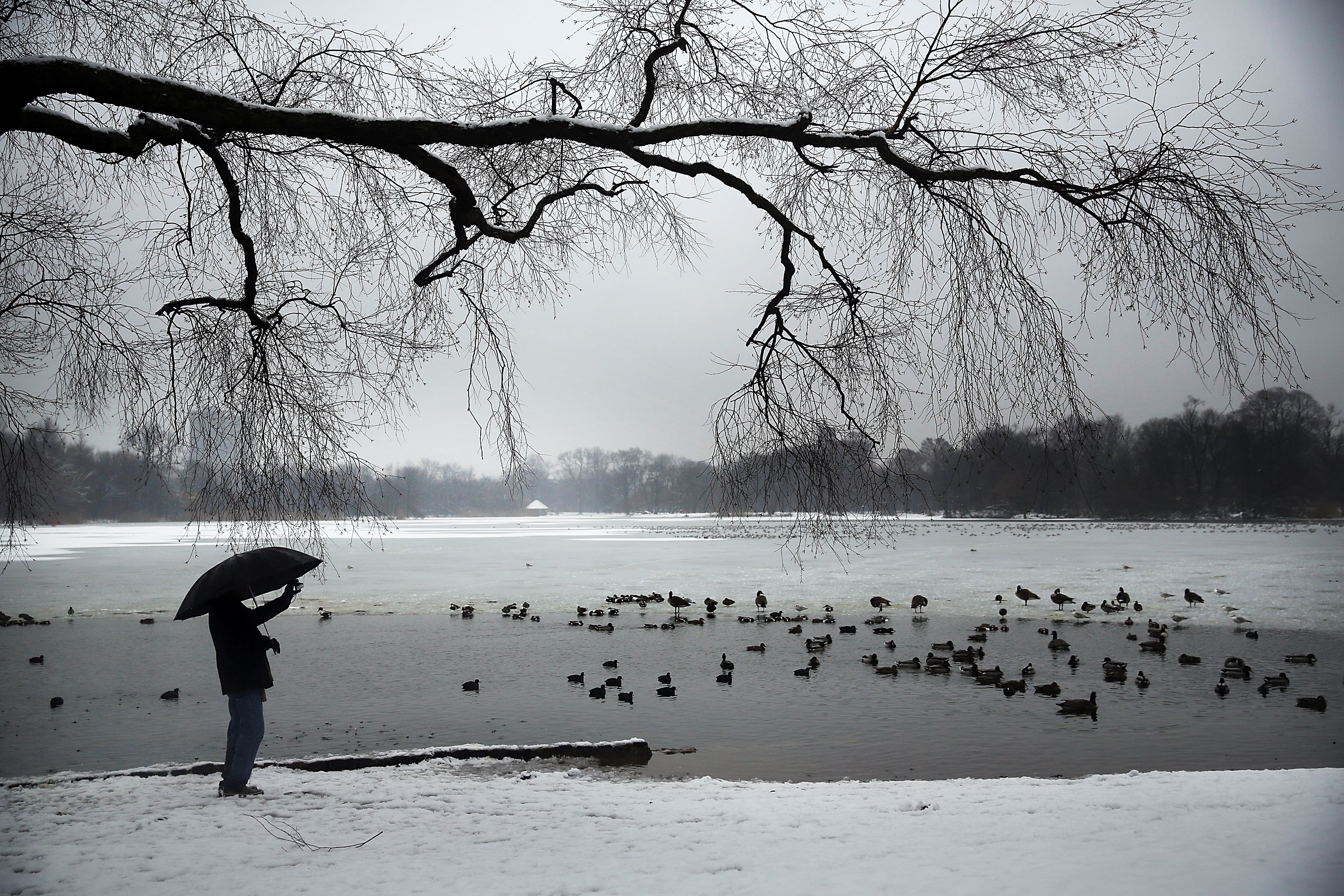 A man takes a picture of ducks and geese at a lake in Brooklyn's Prospect Park following an evening storm on Saturday. The Nor'easter brought snow and freezing rain to much of the Northeast, creating hazardous travel conditions in many areas, and more snow is expected Monday.
