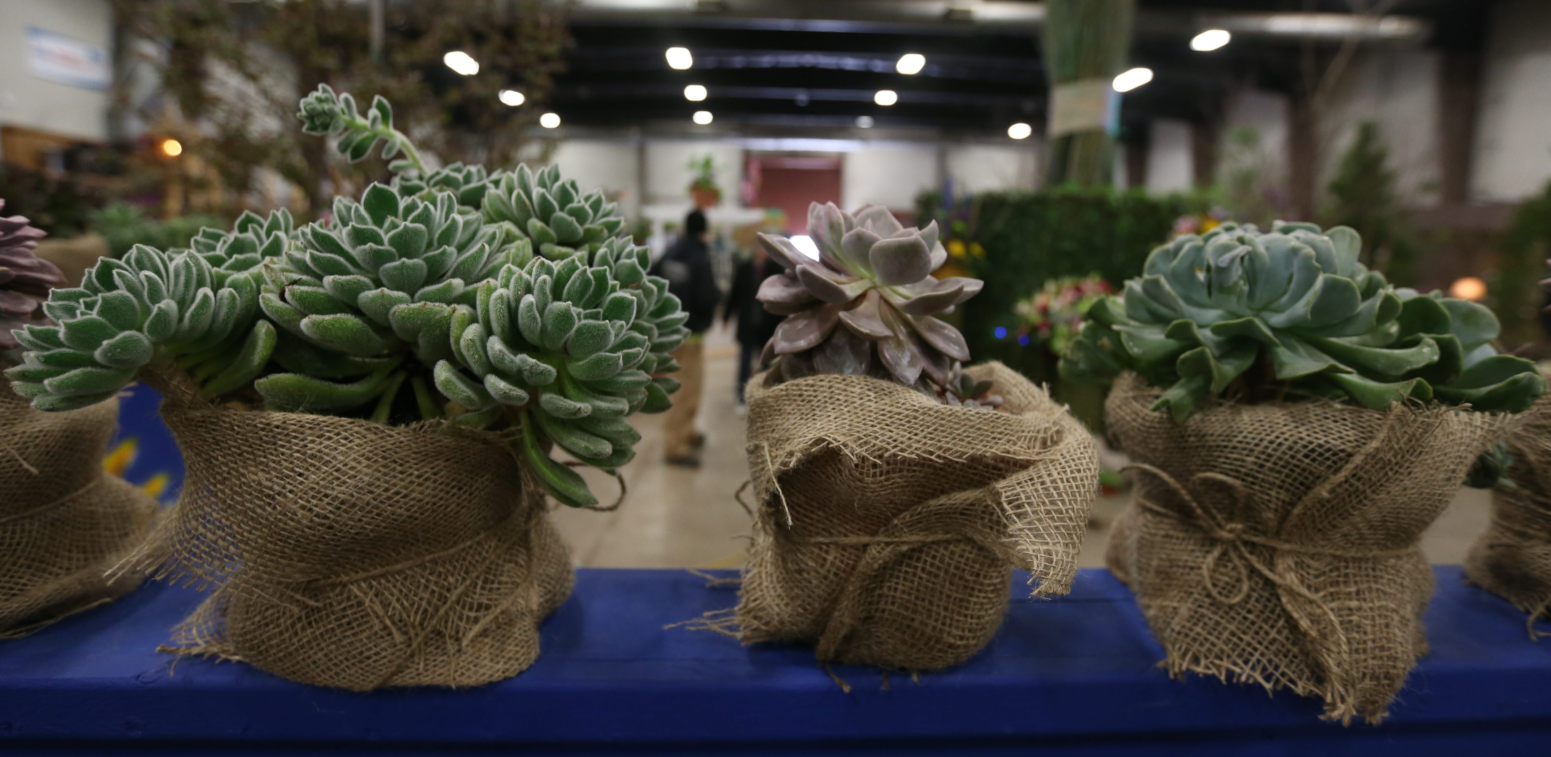 Succulents were well represented at the Plantasia show last weekend in Hamburg.