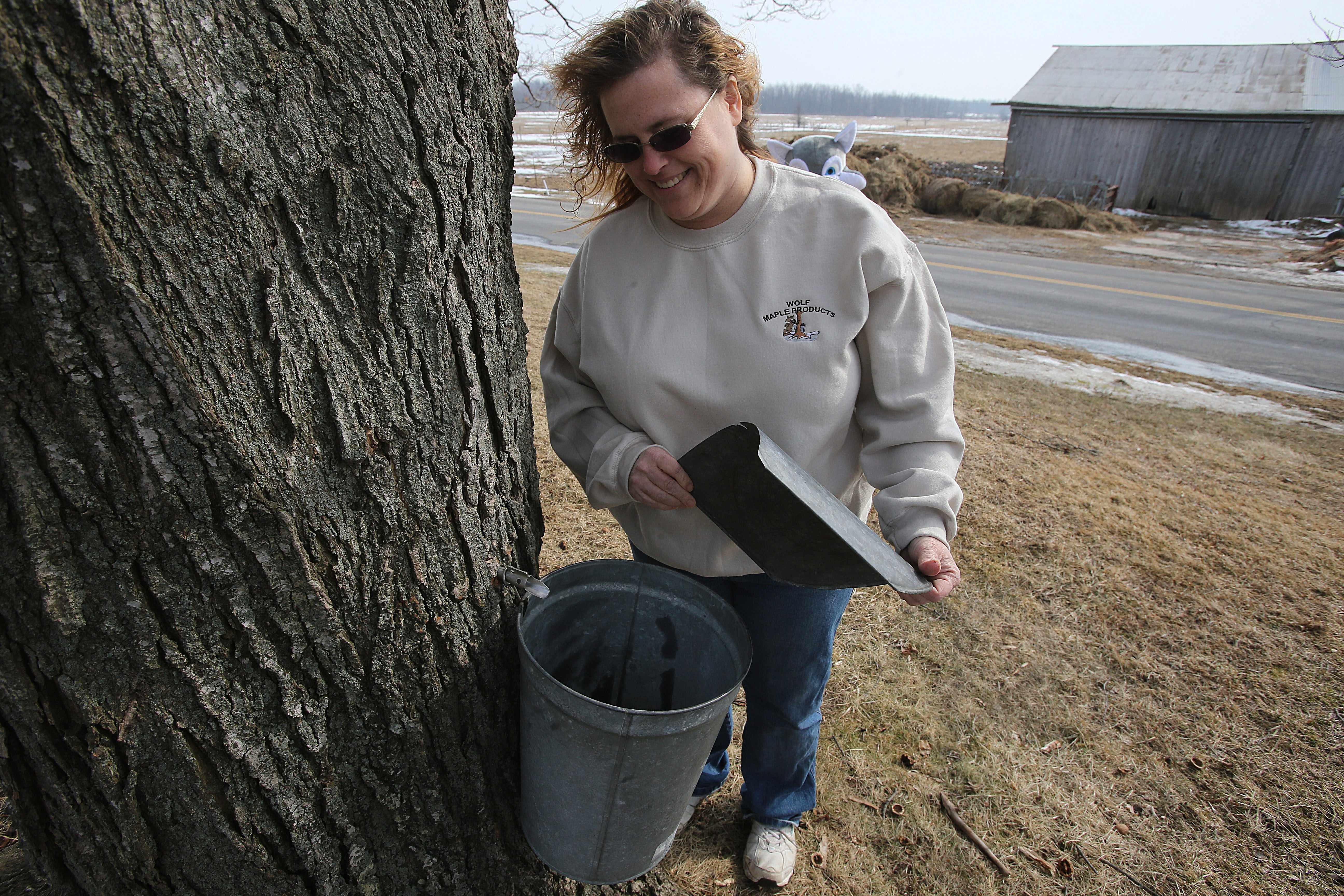 Heidi Wolf checks the sap level in a bucket hanging on a maple tree outside of her Middleport home, where Wolf Maple Products is based, last March.