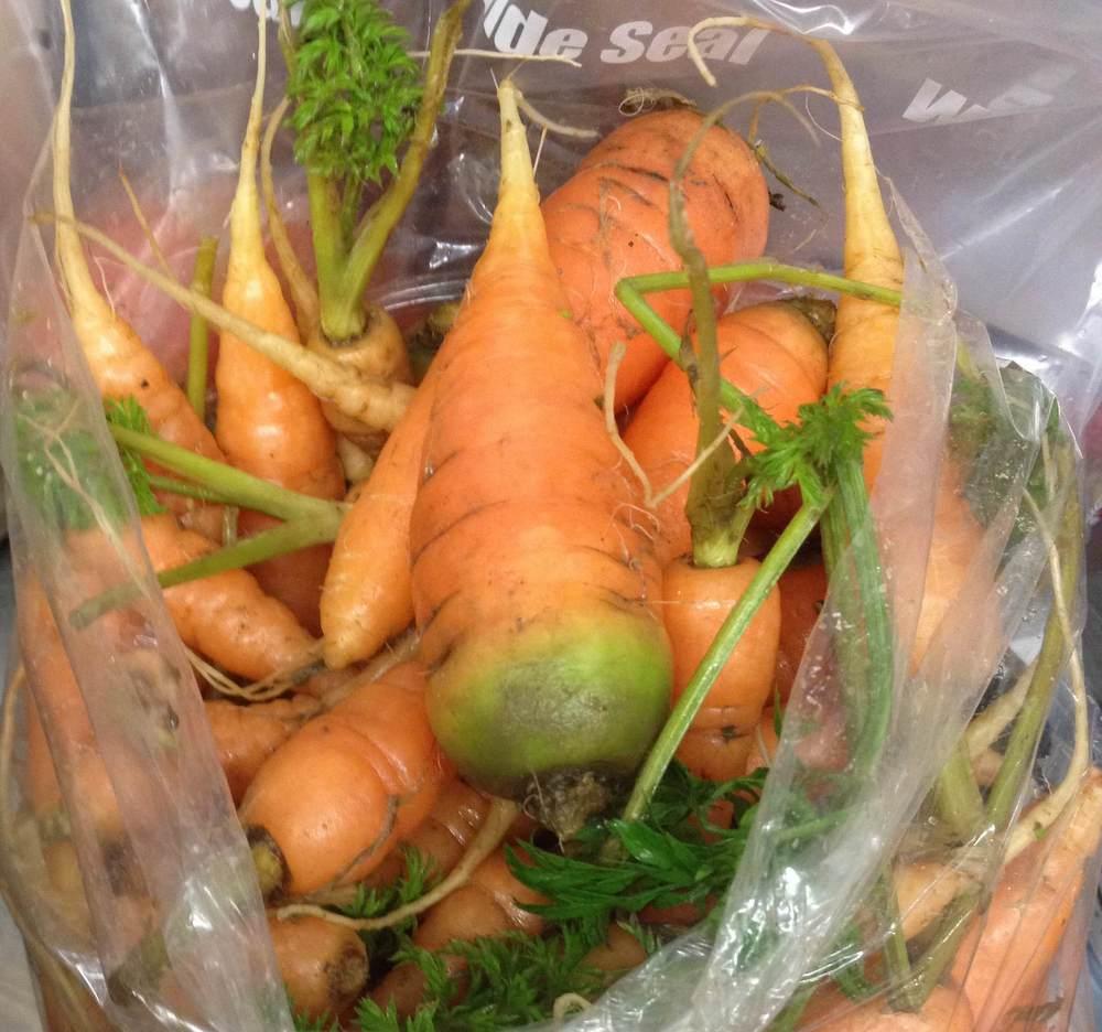 Fresh Arden Farm carrots (Photo/Arden Farm)