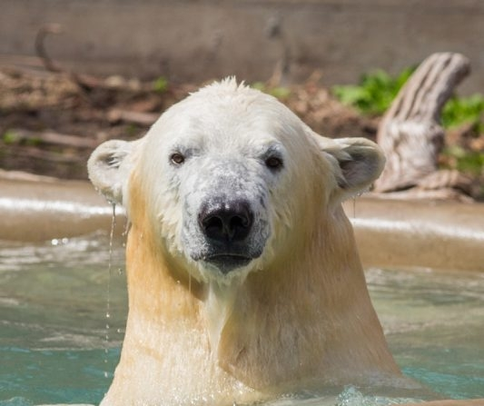 Kali was photographed last month at the Buffalo Zoo. (Kelly Brown/Special to The News)