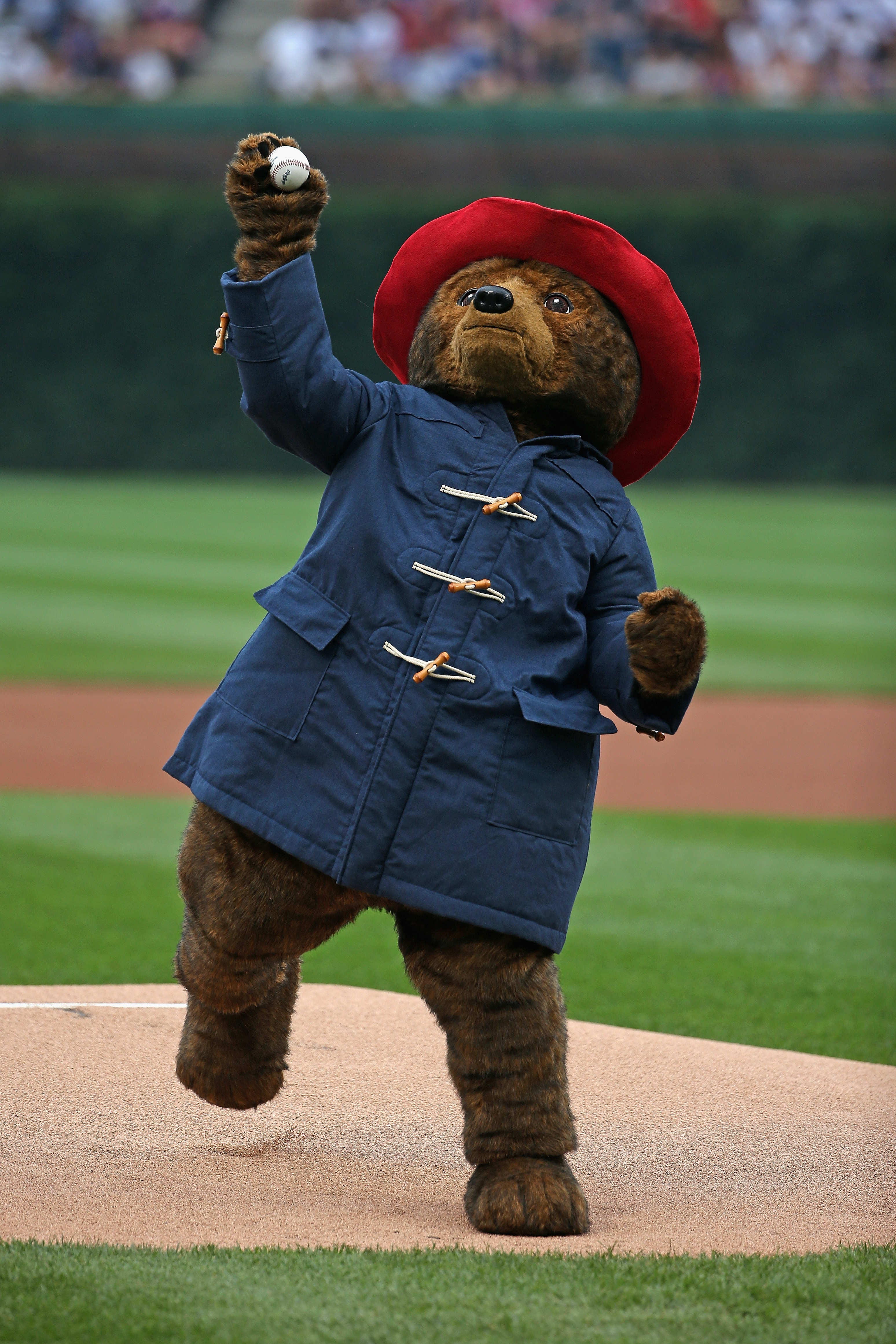 Cubs prospect: Paddington Bear throws out a ceremonial first pitch before a game between the Chicago Cubs and the Los Angeles Dodgers on Thursday at Wrigley Field in Chicago.