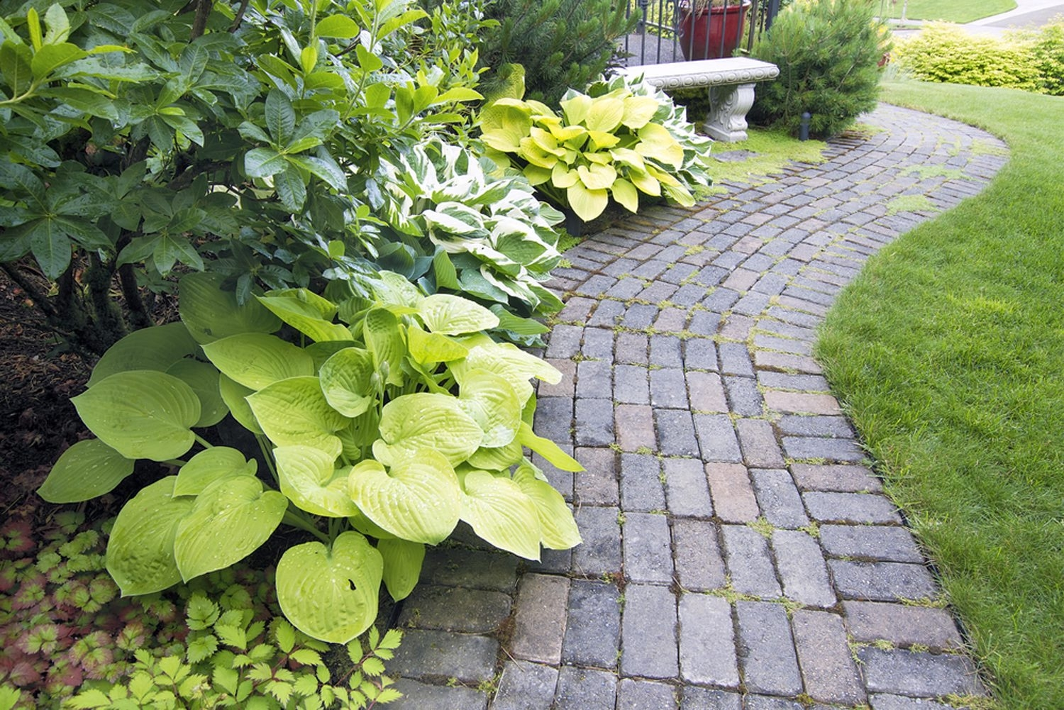 """""""Hostas are the perfect 'Guy Plant.' It rests under the snow in winter. You lie on the couch and watch football. And then in the spring, it's back. Just look at your garden!,"""" said Mike Shadrack, hosta expert."""