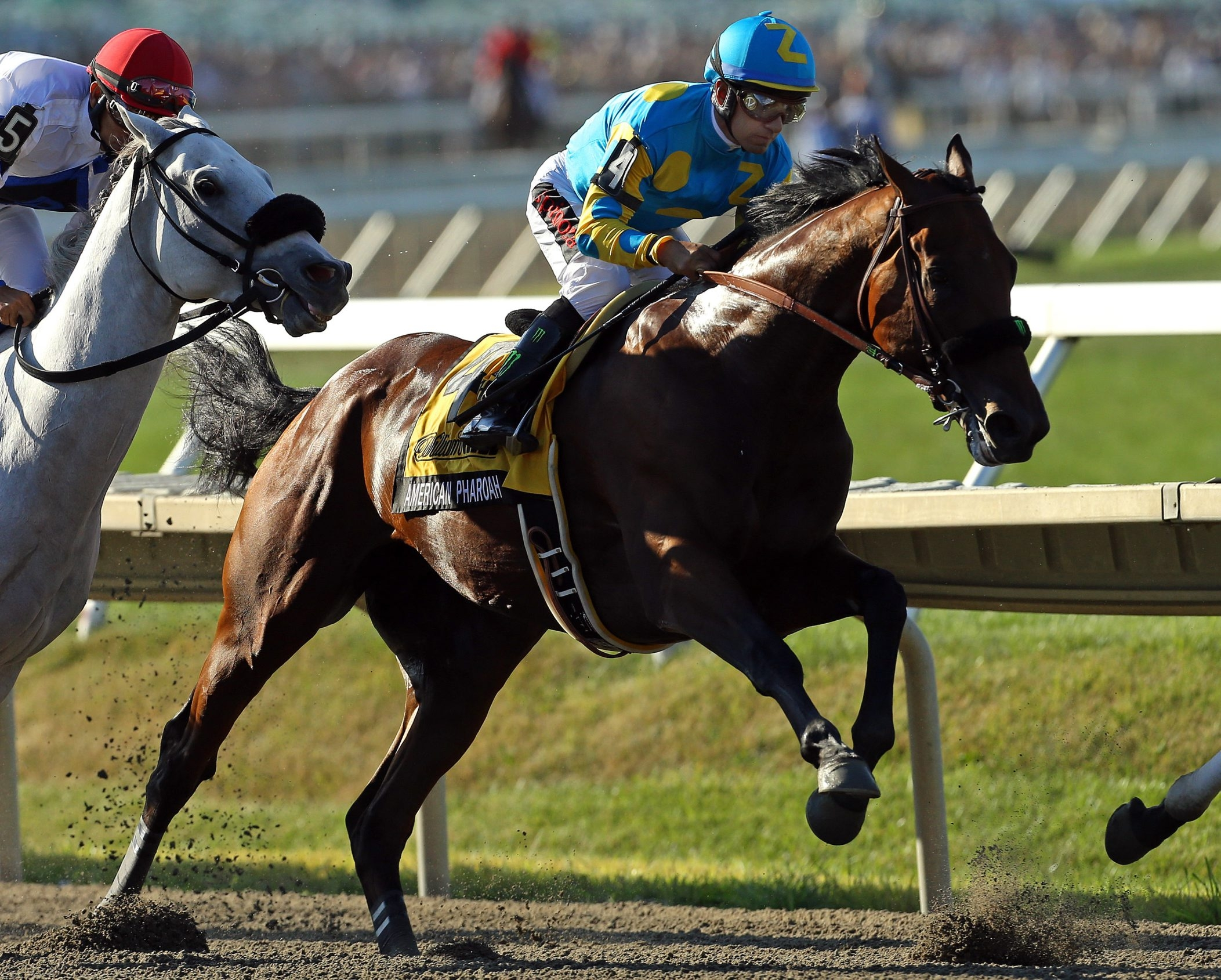 American Pharoah will take part in his last race at Saturday's Breeders' Cup.