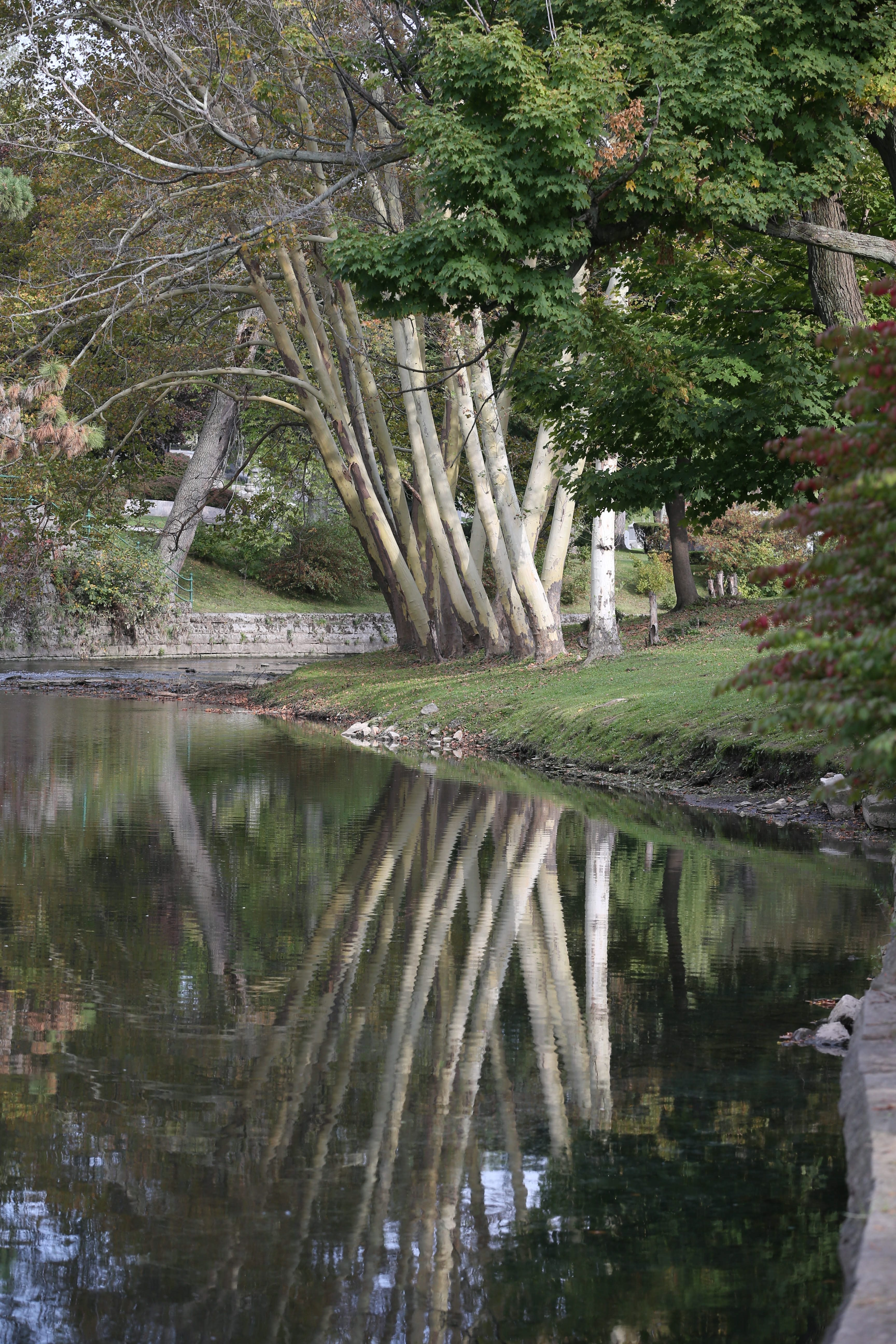 Forest Lawn Cemetery in its beautiful parklike setting is filled with a wealth of history and intriguing headstones and monuments. Reflections on Scajaquada Creek.