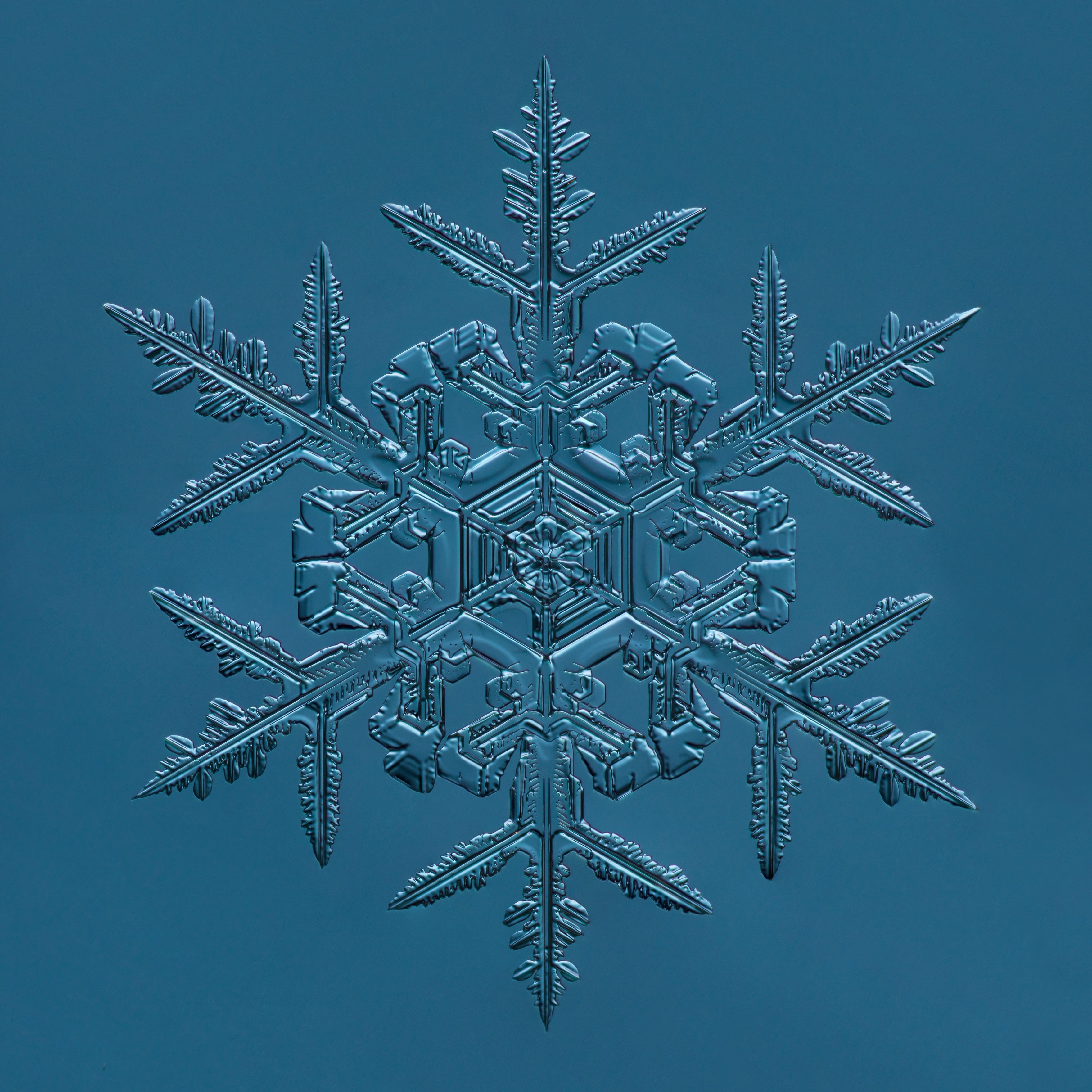 """Douglas Levere's photographs of snowflakes under a microscope were on view in CEPA Gallery's exhibition """"Fire and Ice.""""  Title: Snowflake, Fernlike Stellar Dendrite, 2015.02.02.008"""