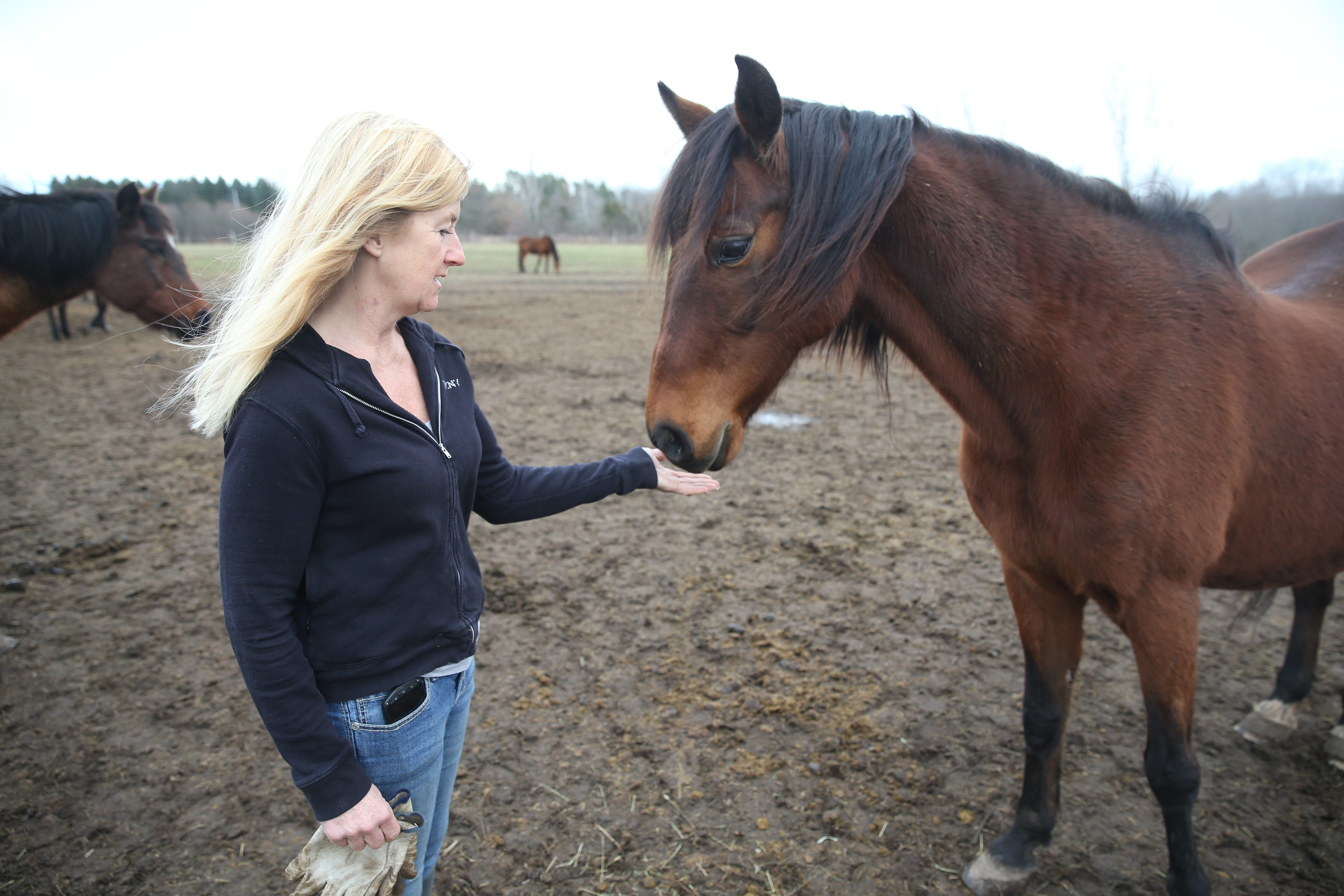 """Marie Bennett, who has been caring for Beth Hoskins' horses at Foxhunt Stables in Lockport since August, is concerned about the welfare of the animals. """"I cried. I was so upset that I called the SPCA attorney crying,"""" Bennett said Sunday.  (Sharon Cantillon/Buffalo News)"""