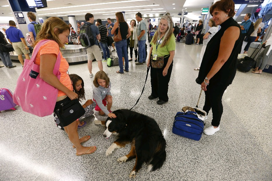 Pamela Rose, rear, and her Bernese Mountain Dog, Sophie, look to bring down the stress at least twice a year, as well as most Fridays at the Buffalo-Niagara International Airport. (Mark Mulville/Buffalo News file photo)