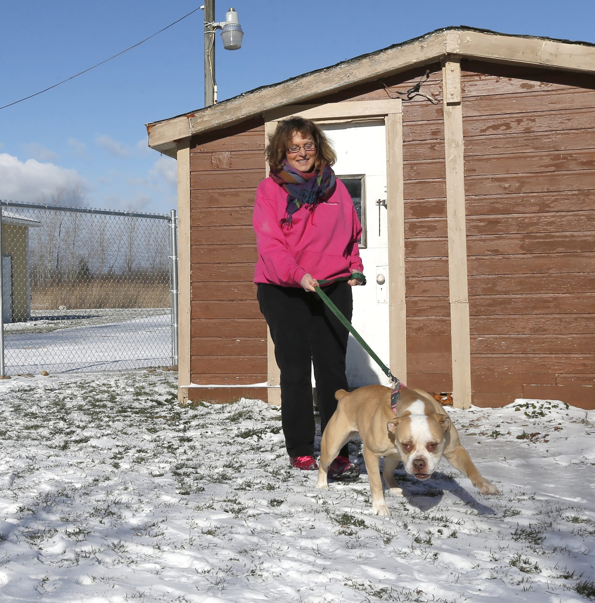 Linda van Harssel, secretary of the board of directors of Heart of Niagara Animal Rescue, walks Clarabelle, a 5-year-old rescued bulldog, at the organization's new home in the Lockport-Newfane area.