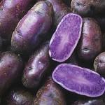 purple_potato_2192_general