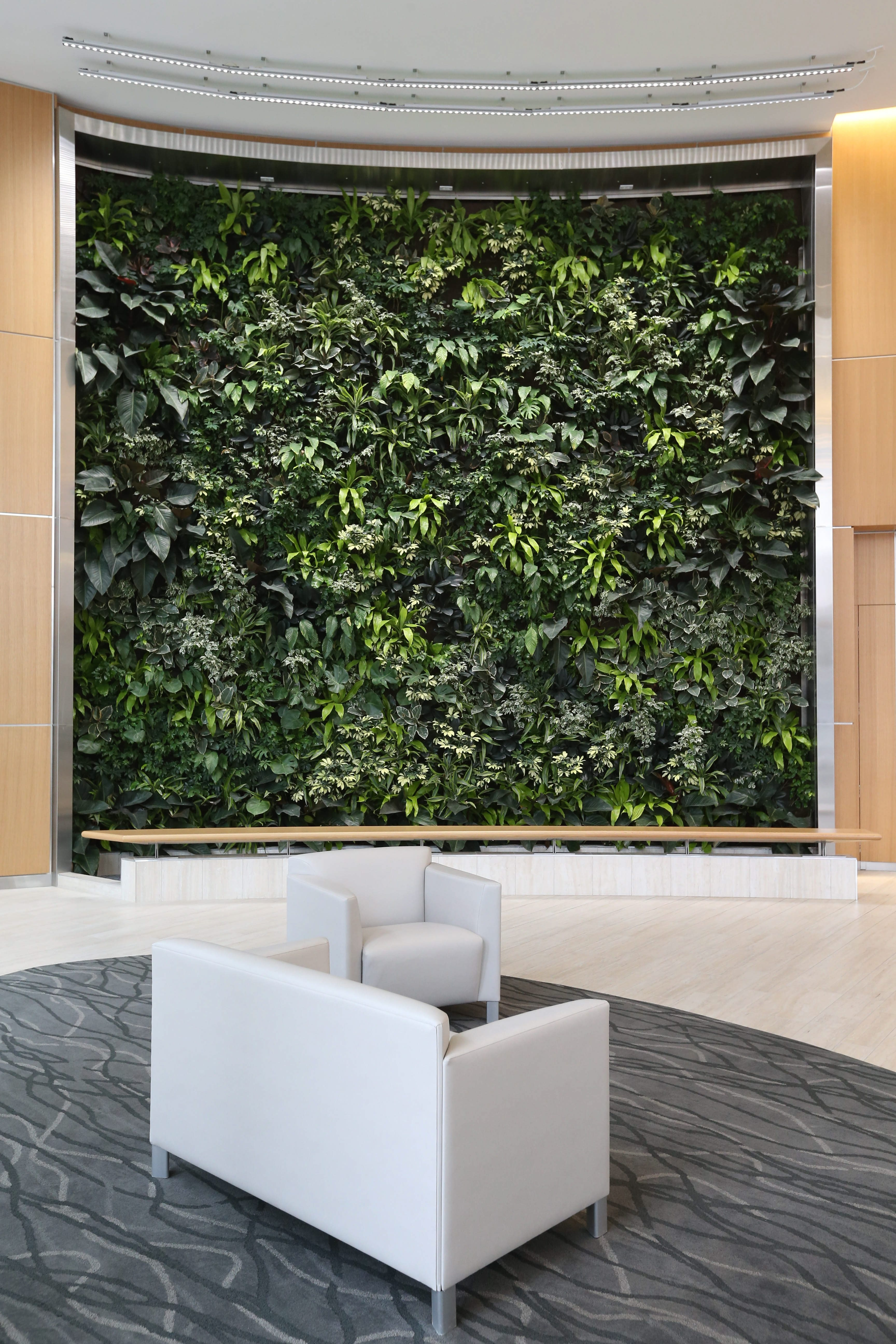 A green wall is found in the lobby of the multi-use building at 250 Delaware Ave. constructed by Uniland  Development Co. It serves as new world headquarters for Delaware North.  It's a wall filled with living plants.  Photo taken, Tuesday, Feb. 23, 2016.  (Sharon Cantillon/Buffalo News)