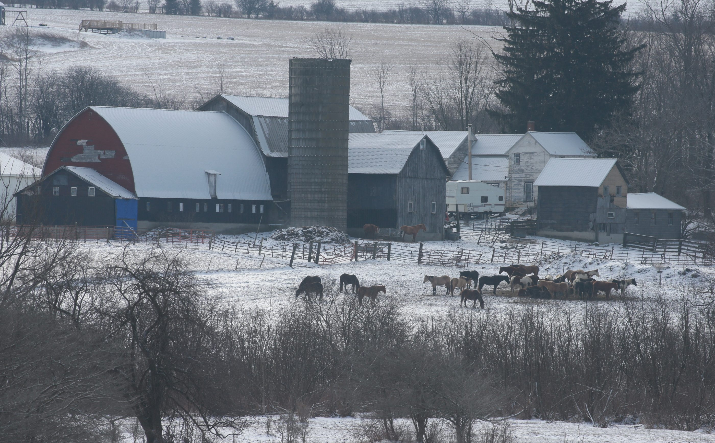 Frozen, dying horse leads to seizure of 600 animals at