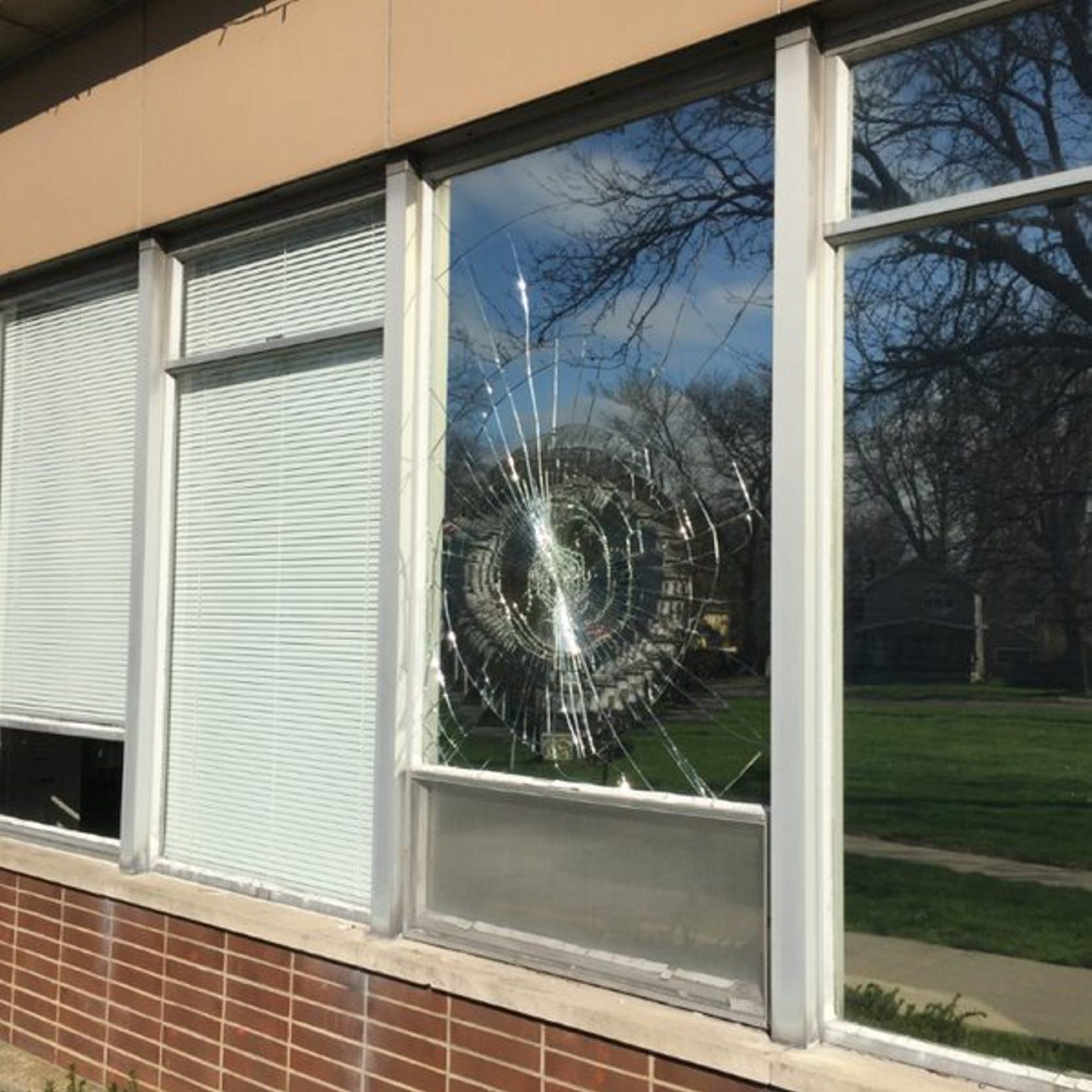 Tough turkey with window on the world takes Tonawanda police by surprise