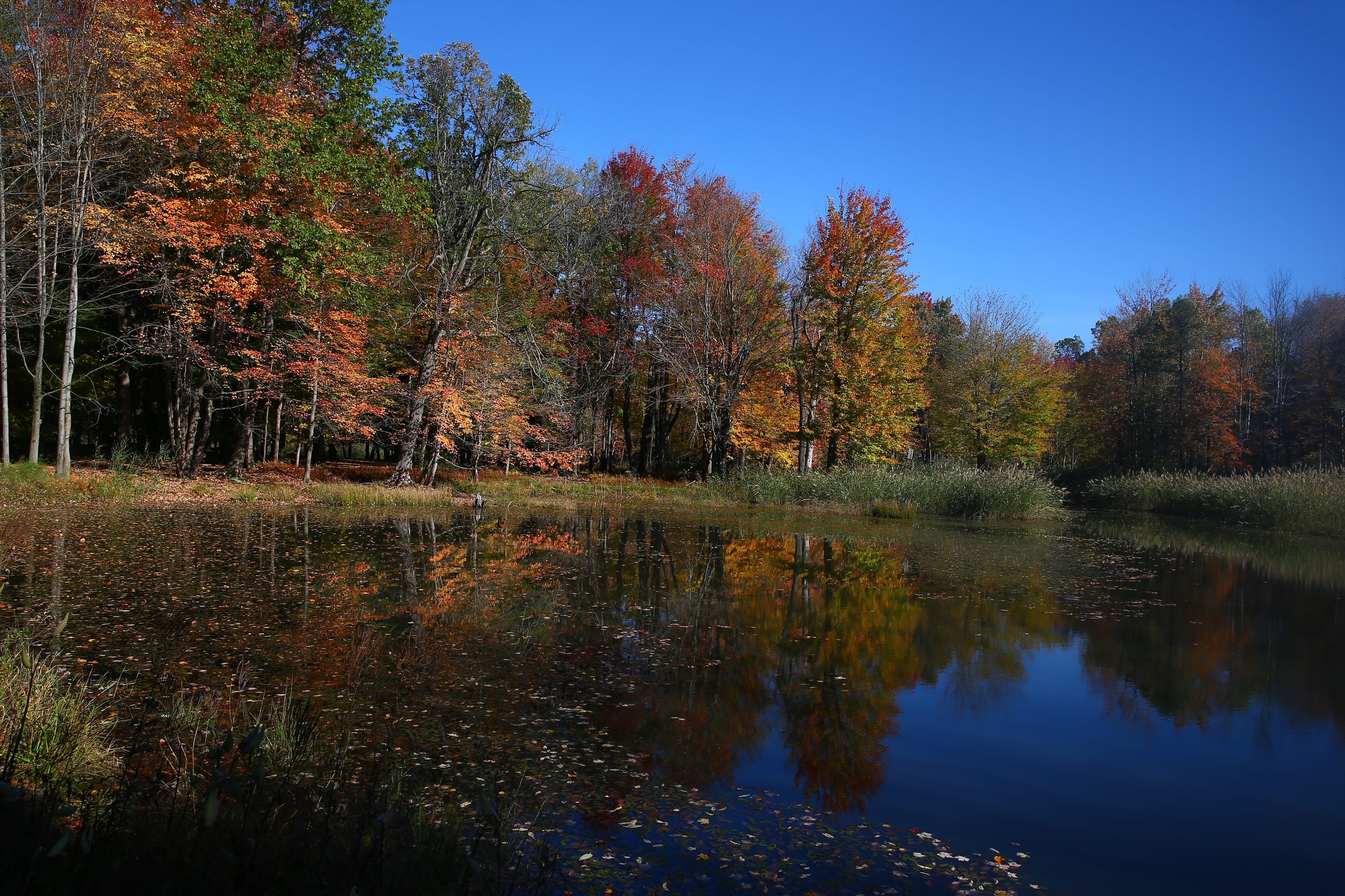 """Join the """"warbler walk"""" at Reinstein Woods from 10:30 a.m. to 12 p.m. this Saturday. (John Hickey/News file photo)"""