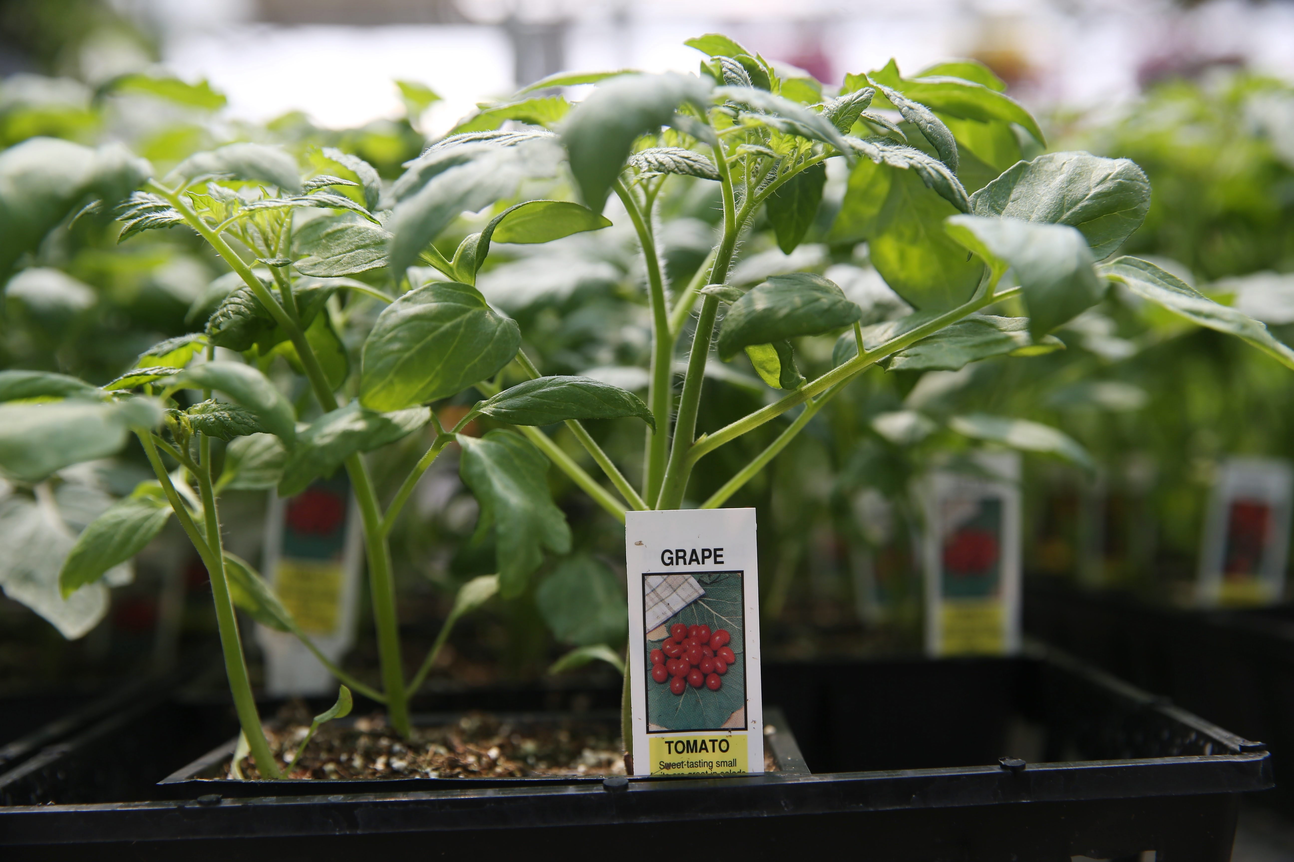 Need to know how to care for your plants? Just follow the directions on the plant tag, says master gardener Carol Sobczak.