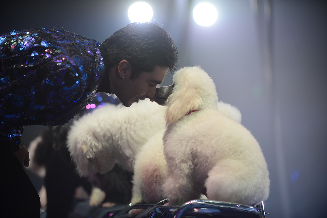 The UniverSoul Circus brings a wide variety of international entertainment including the Olate dogs.