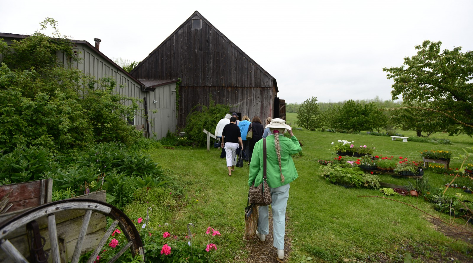 Guests walking to the 200 year old barn for lunch at Hurd Orchards.