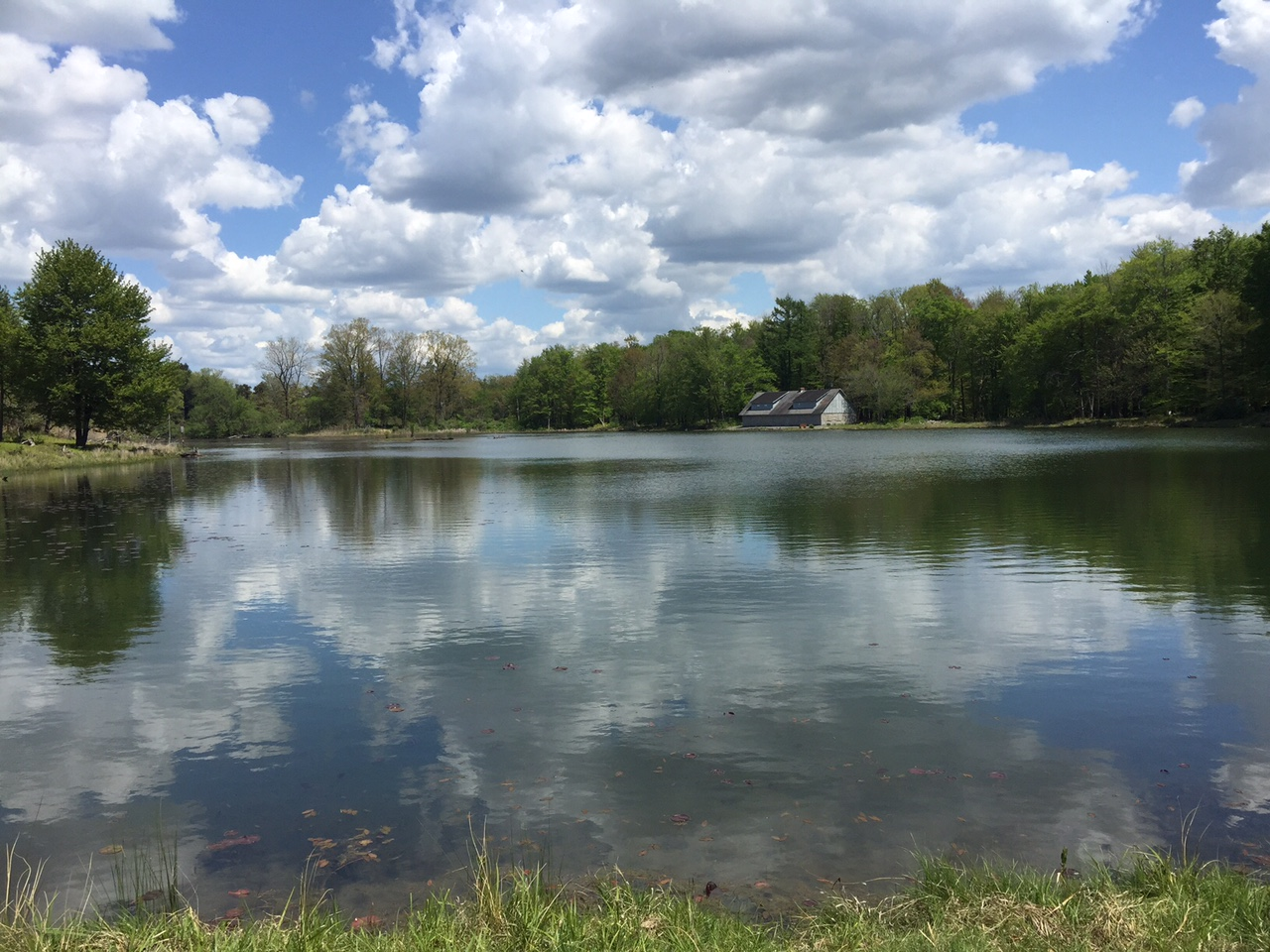 Reinstein Woods offers 292 acres of woods and wetlands. Mary Friona-Celani/Special to The News