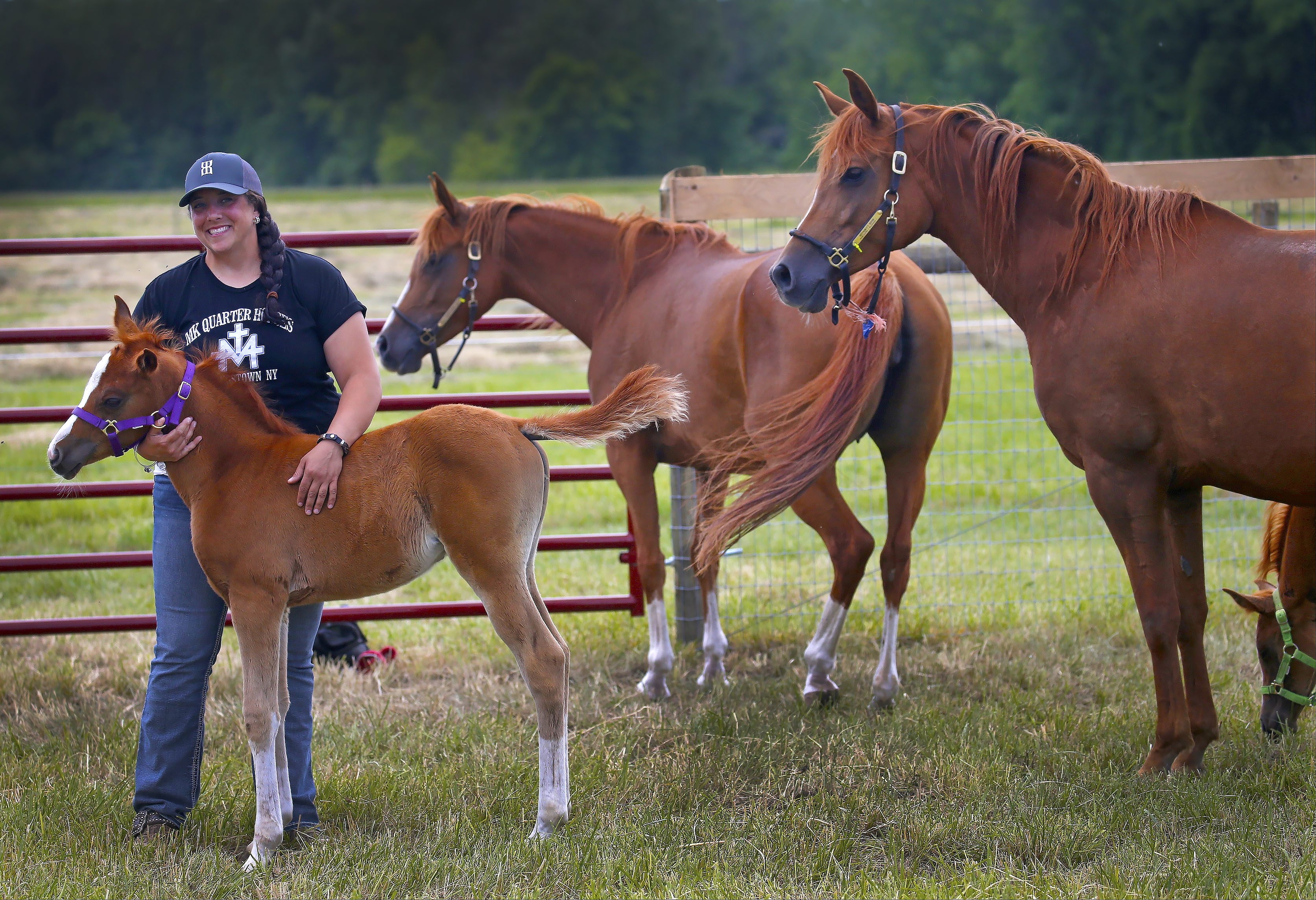 Melissa Koser, who started MK Quarter Horses in Youngstown more than a decade ago, purchased a 40-acre horse farm in Wilson last September.