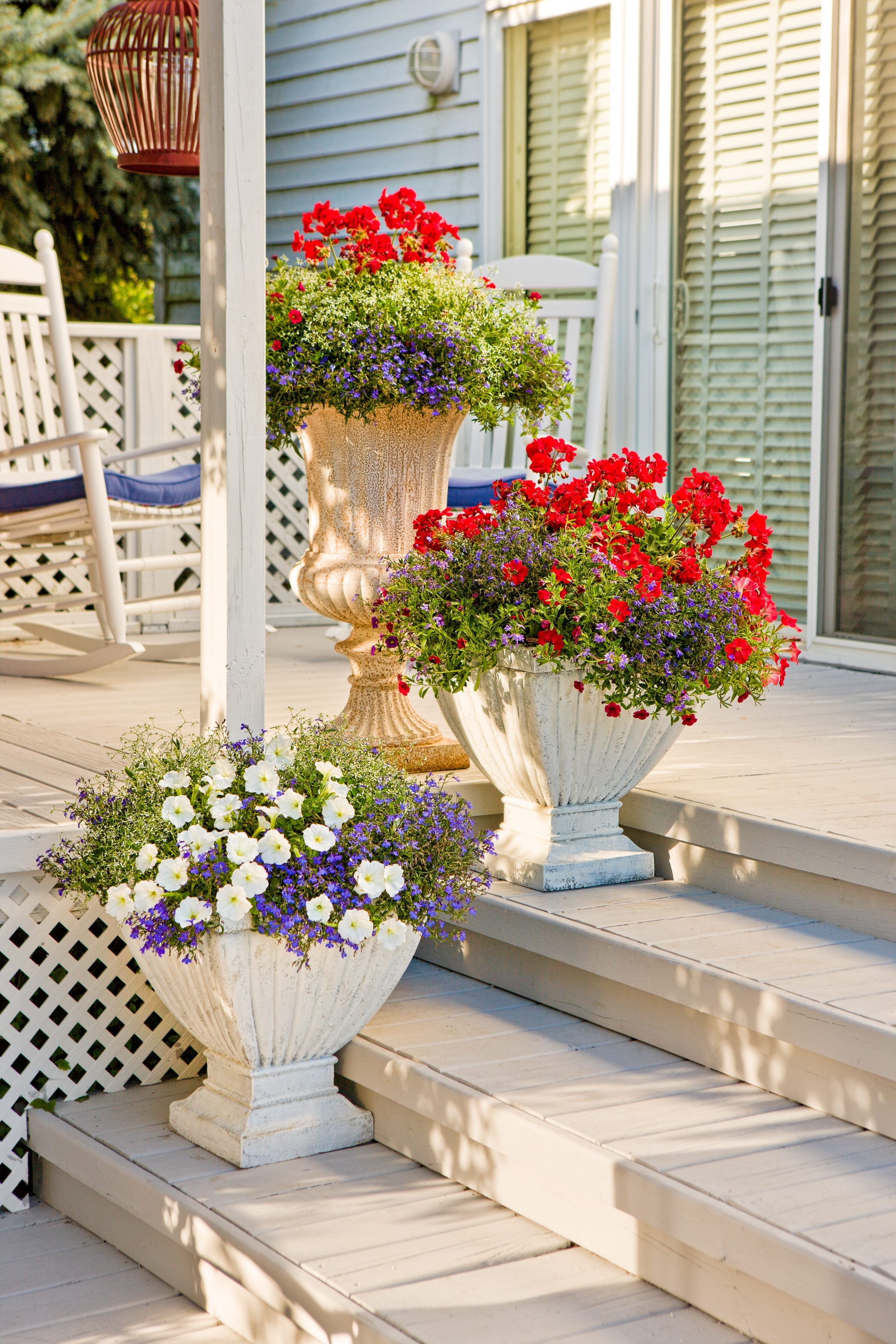 Potted red, white and blue flowers from Proven Winners are festive for the Fourth – and beyond.