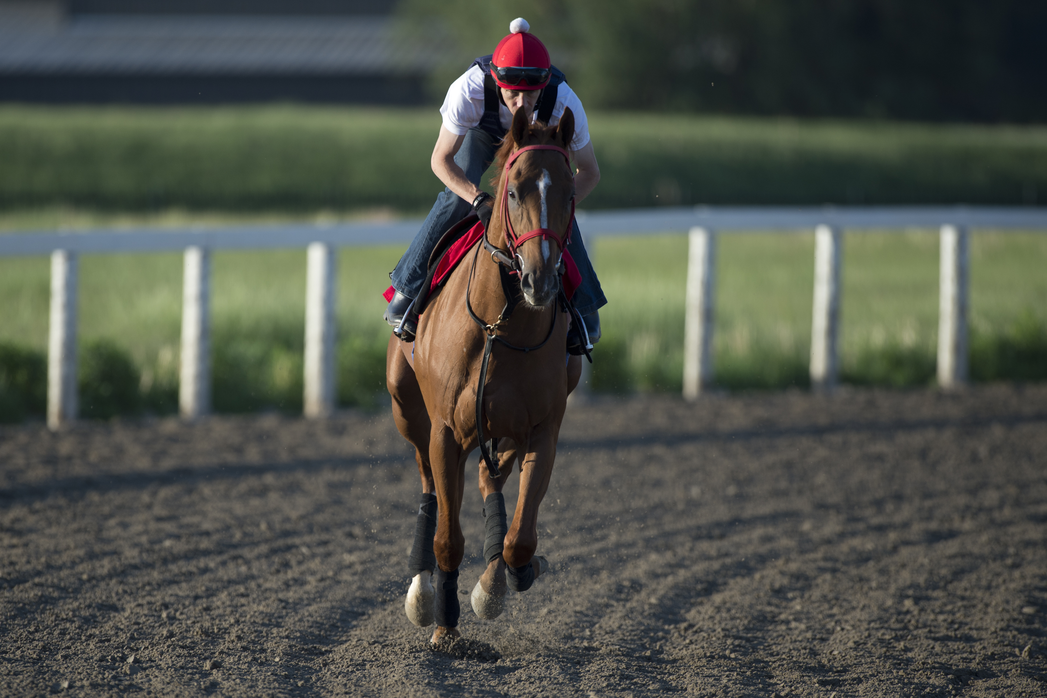 Queen's Plate contender All On Red Photo Credit: WEG/Michael Burns Photo