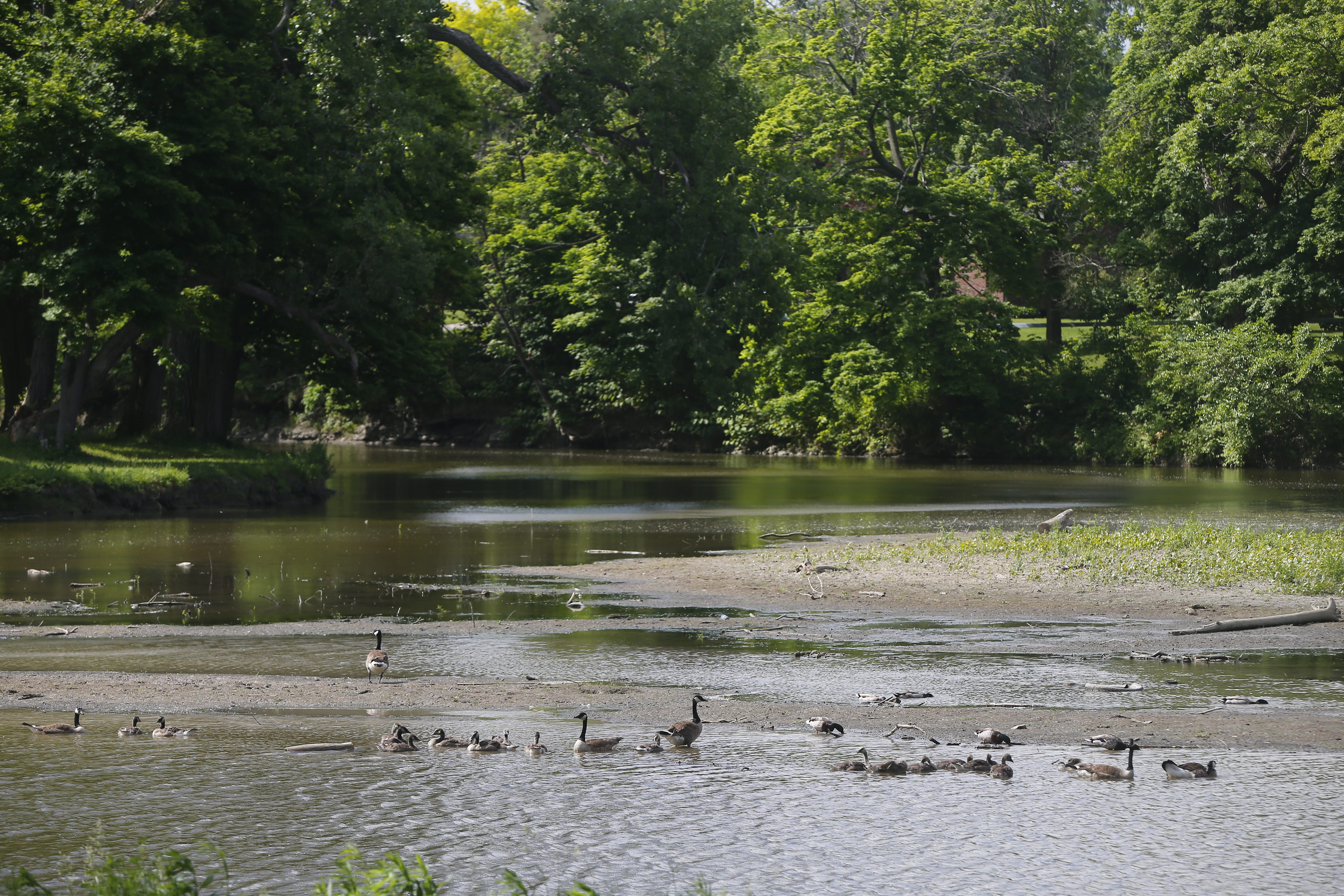 An island of silt has formed in Como Lake at Como Lake Park in Lancaster. (Mark Mulville/Buffalo News)
